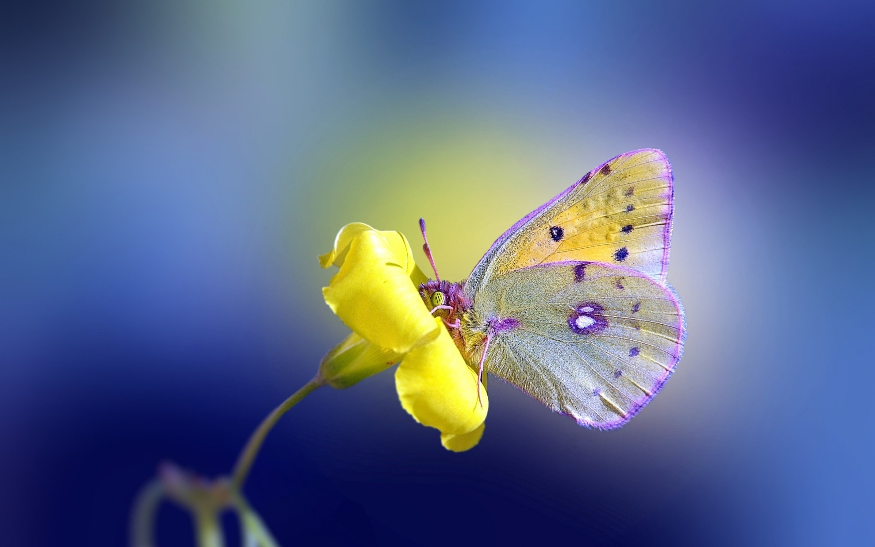 Butterfly Desktop Wallpaper 62 Images