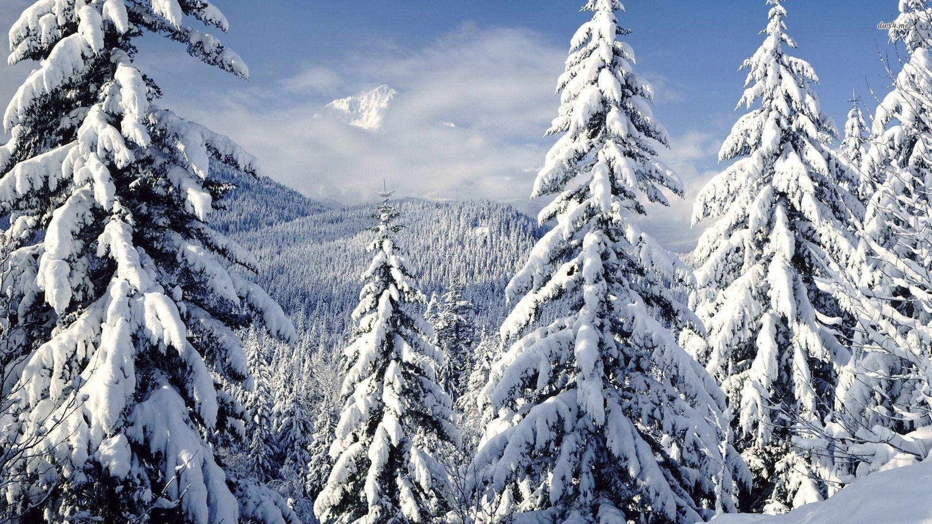 Snowy trees wallpaper 61 images - Snowy wallpaper ...