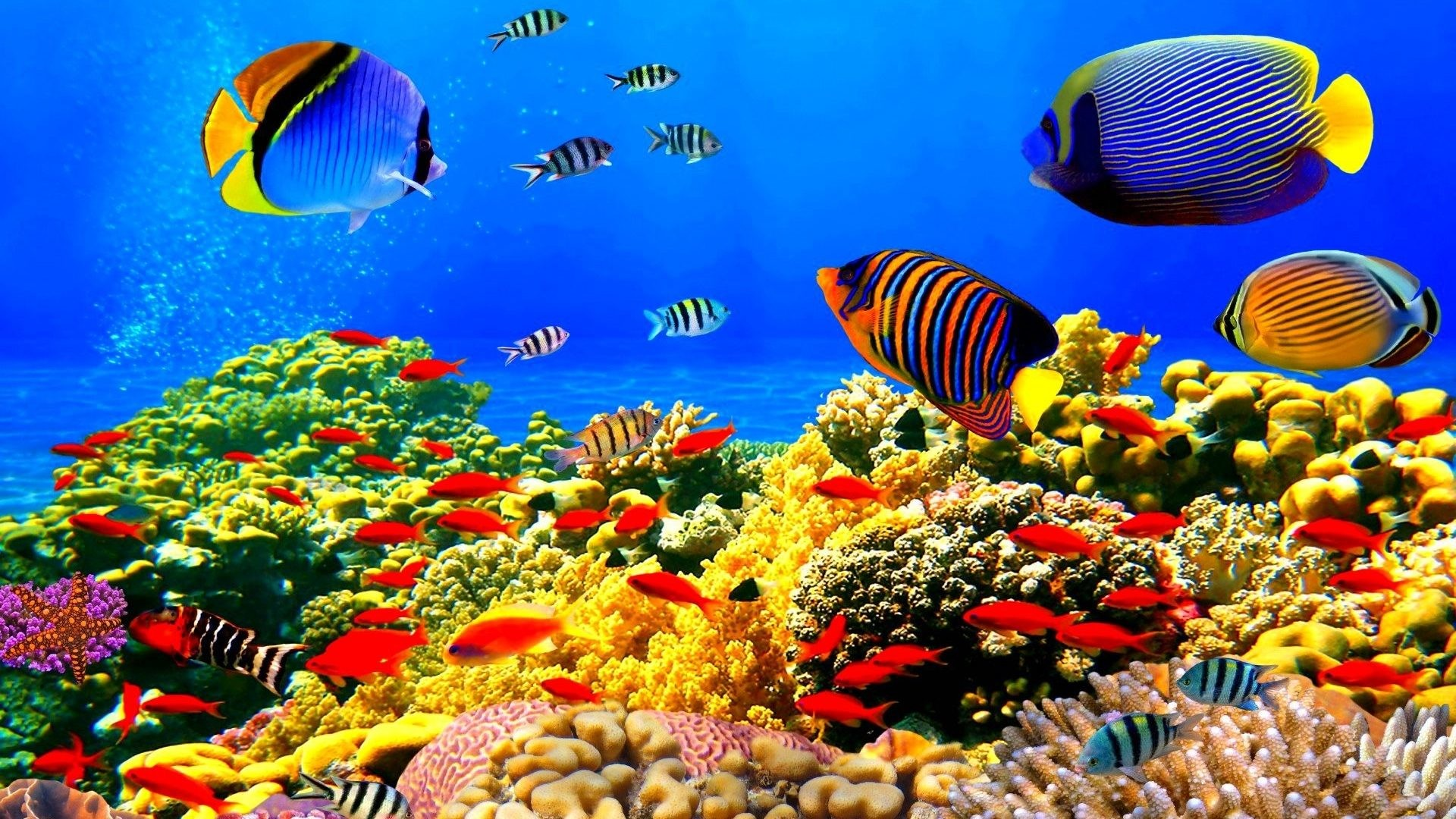 how to make a 3d fish tank background