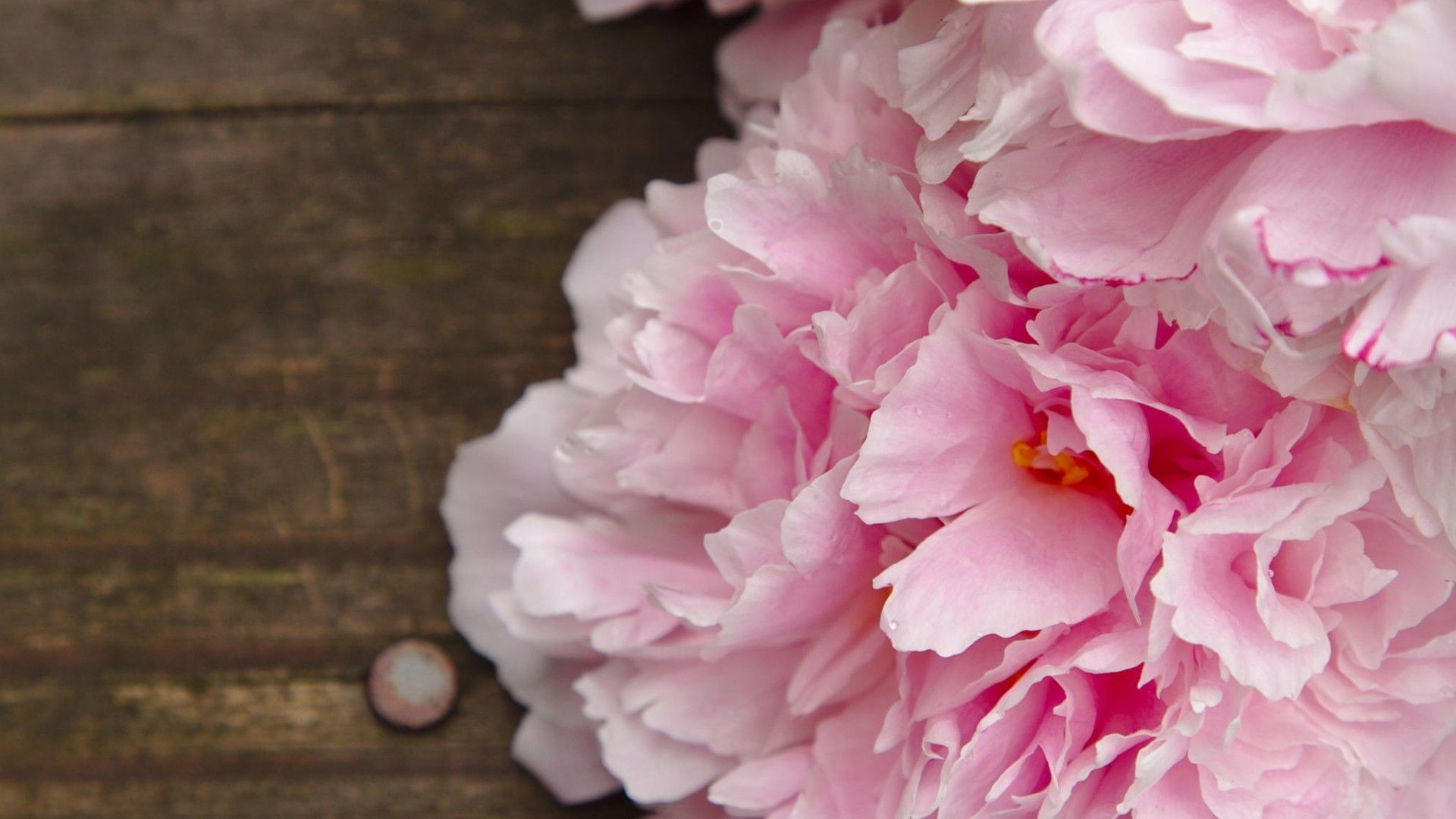1920x1080 ... peonies backgrounds 4k download ...