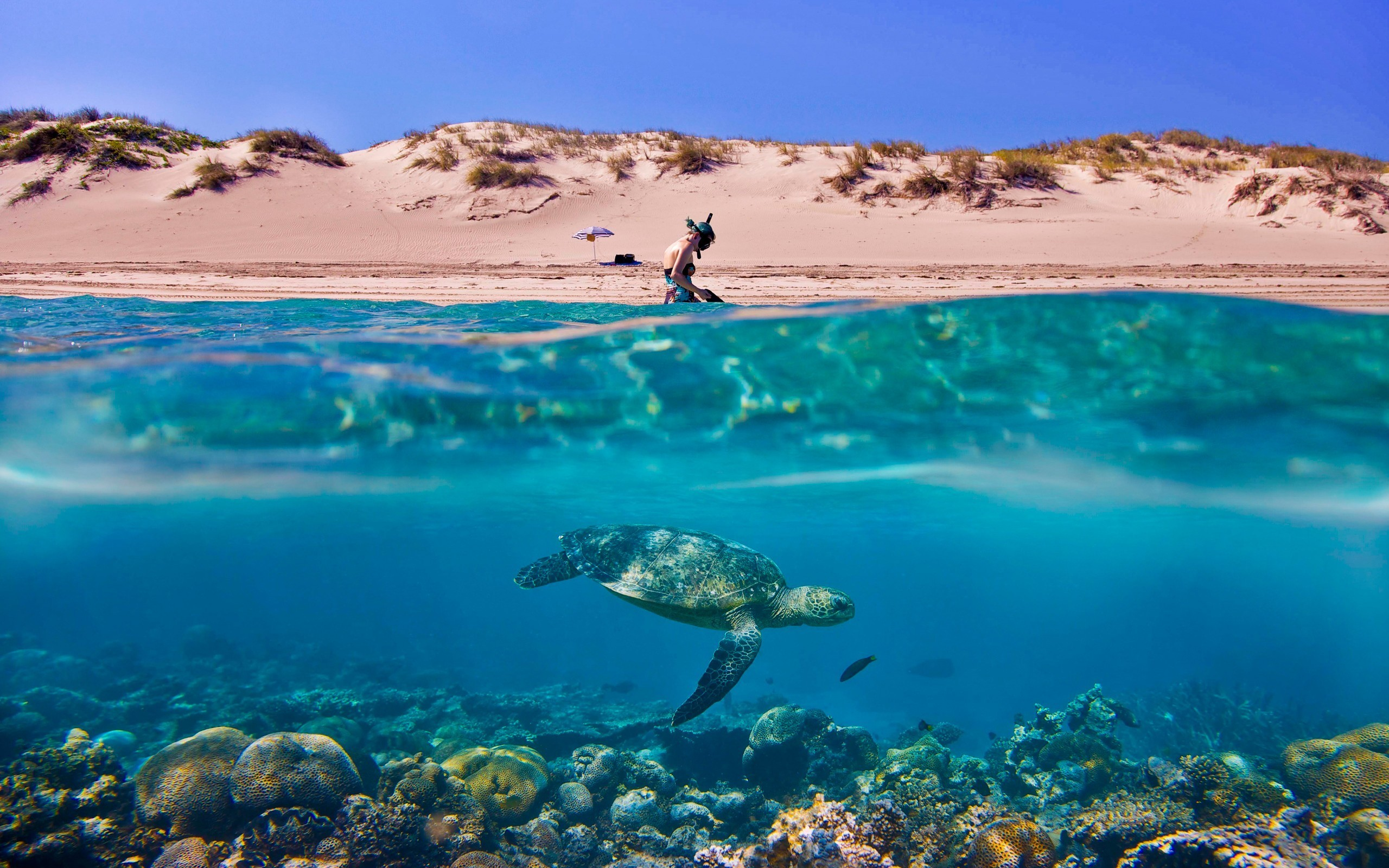 2560x1600 Australia sand dunes umbrellas scuba diving split-view wallpaper