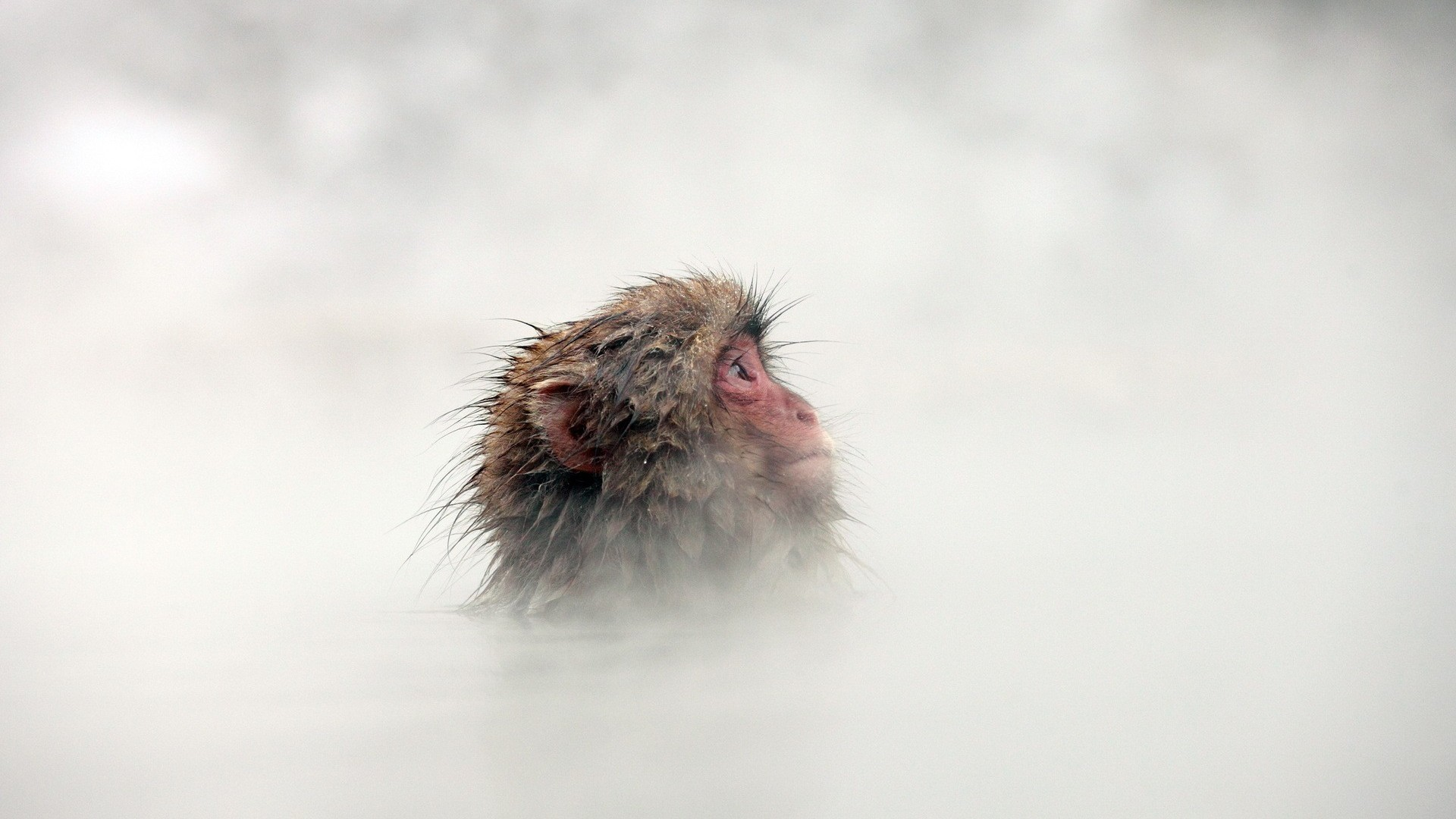 1920x1080 primate water mist animals wallpaper