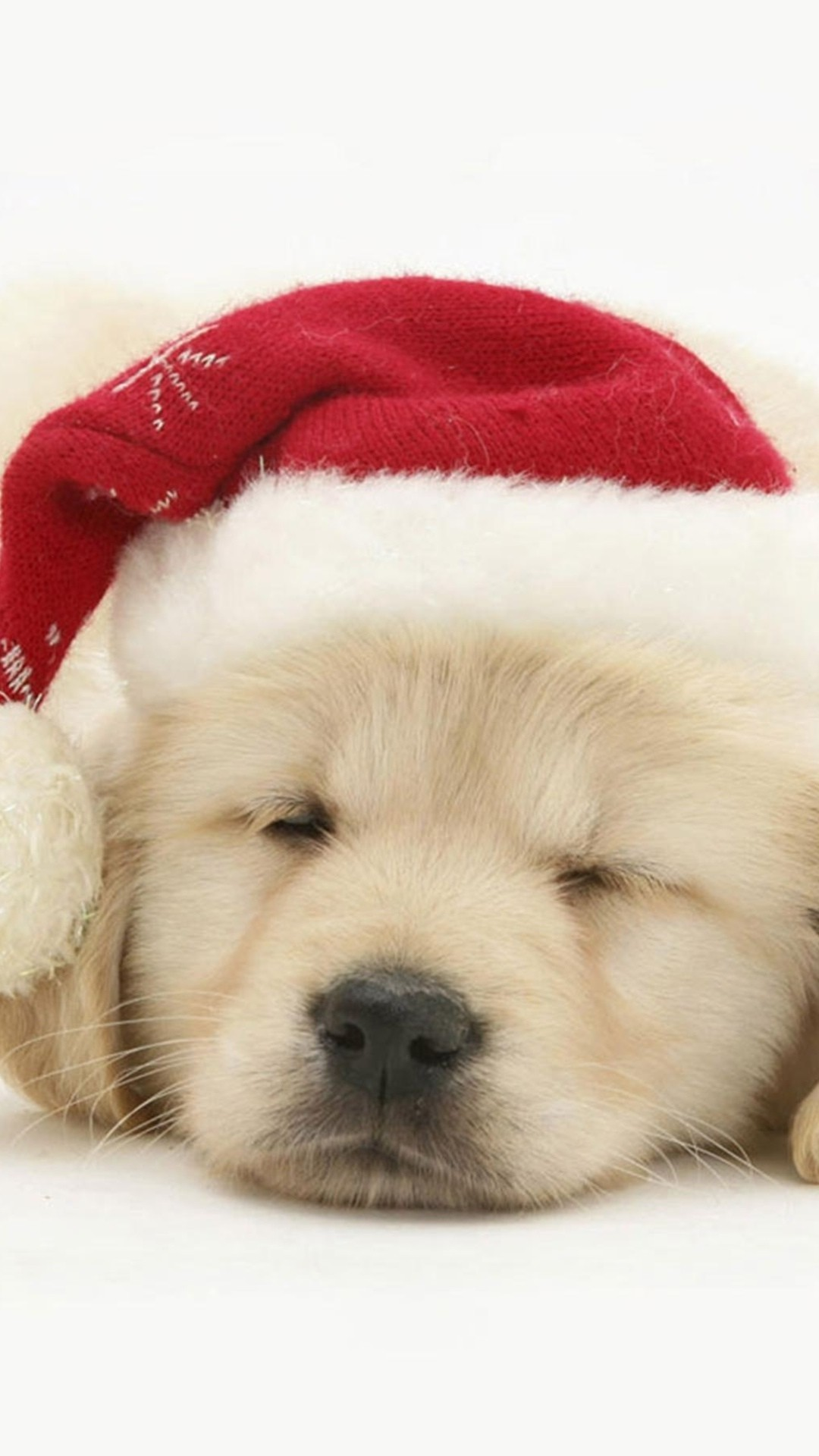 Cute Golden Retriever Puppies Wallpaper 56 Images