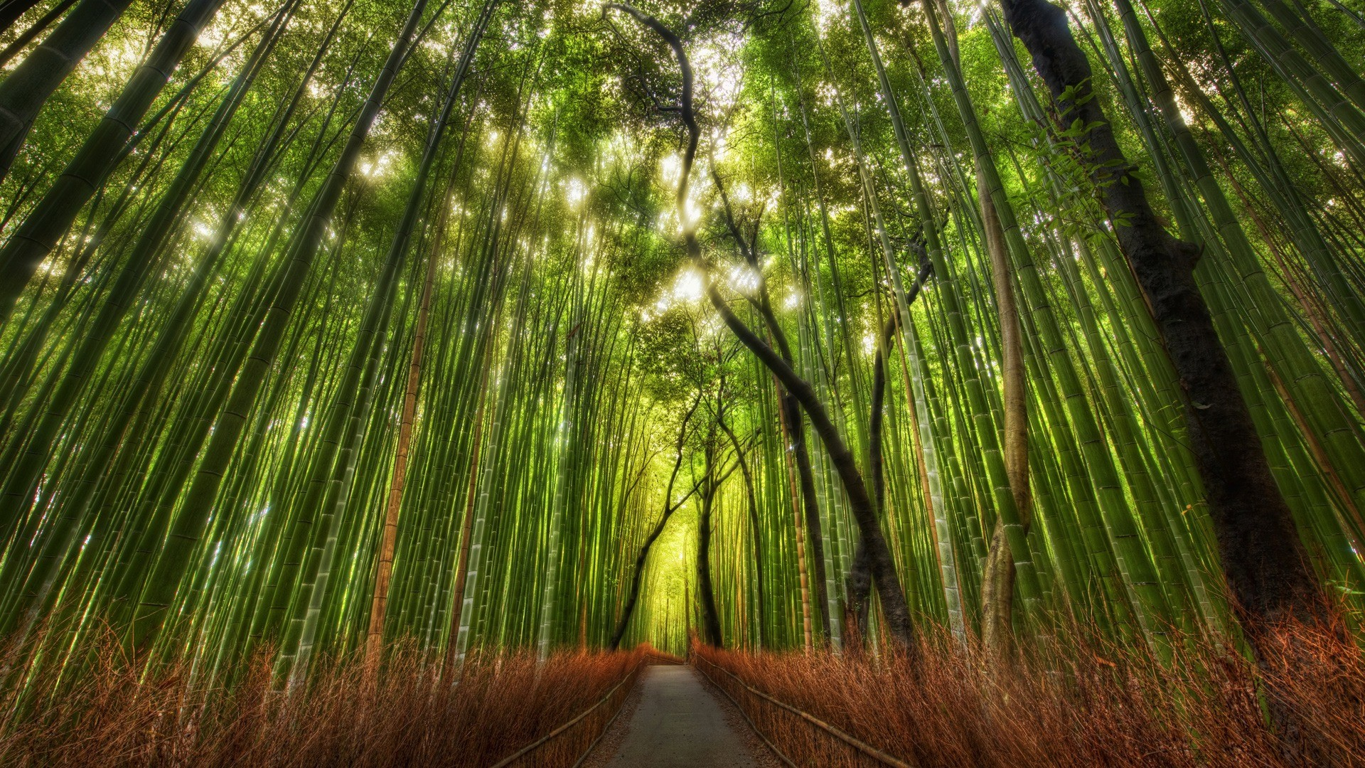 1920x1080 The Bamboo Forest Wallpaper High Dynamic Range Nature Wallpapers