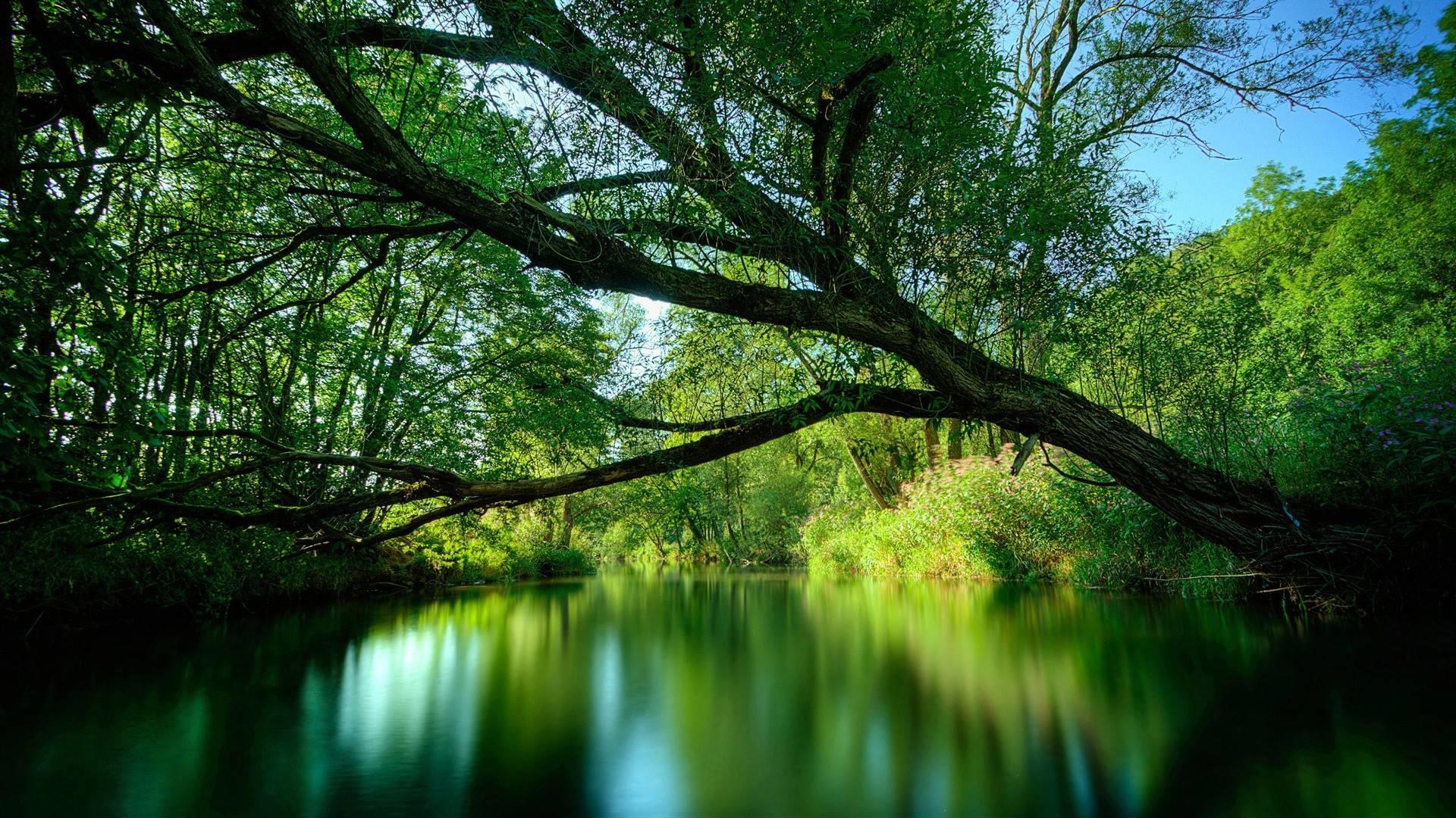 cool nature desktop backgrounds 56 images