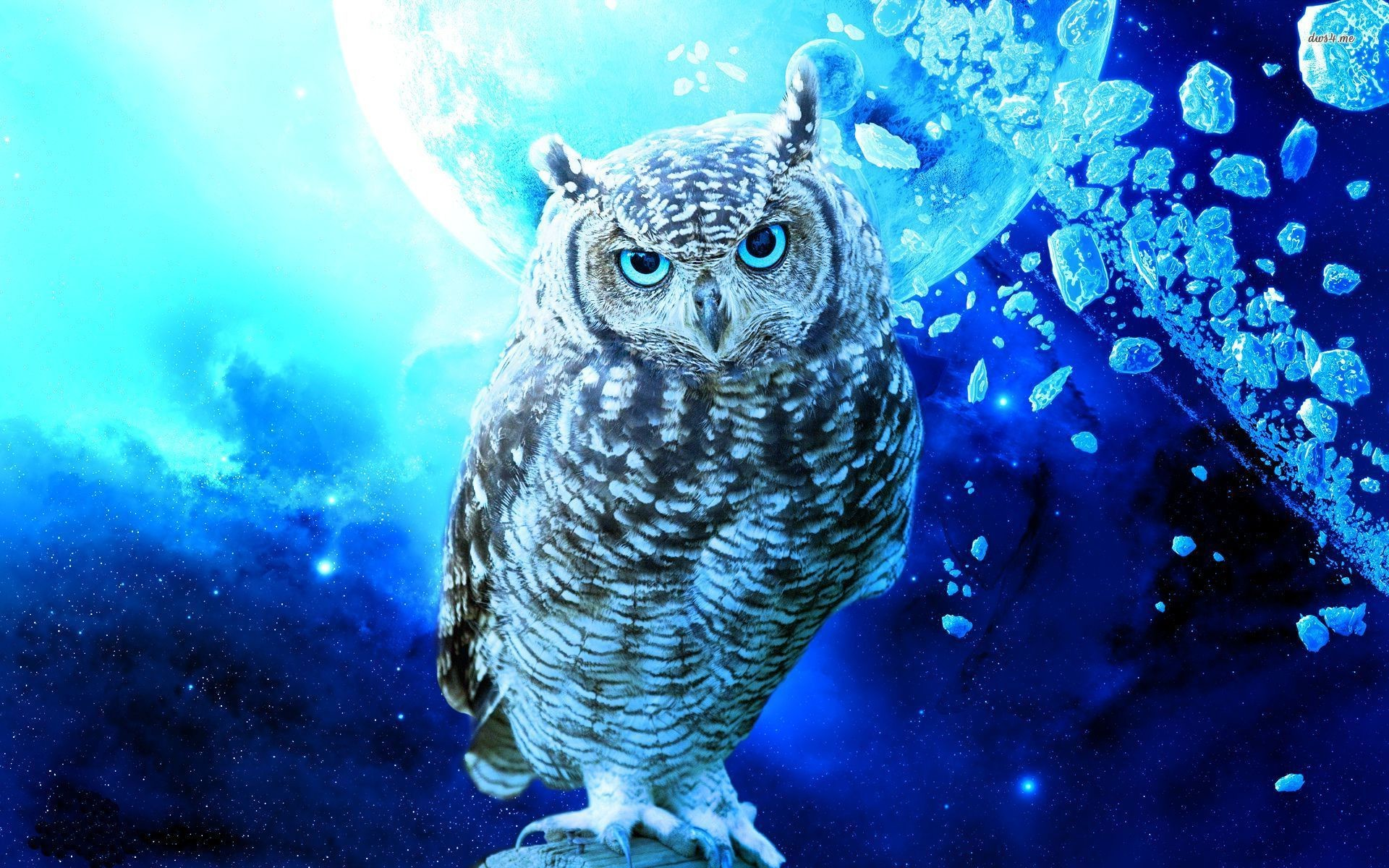 1920x1200 ... Cartoon Owl Wallpaper Wallpapersafari | The House ...