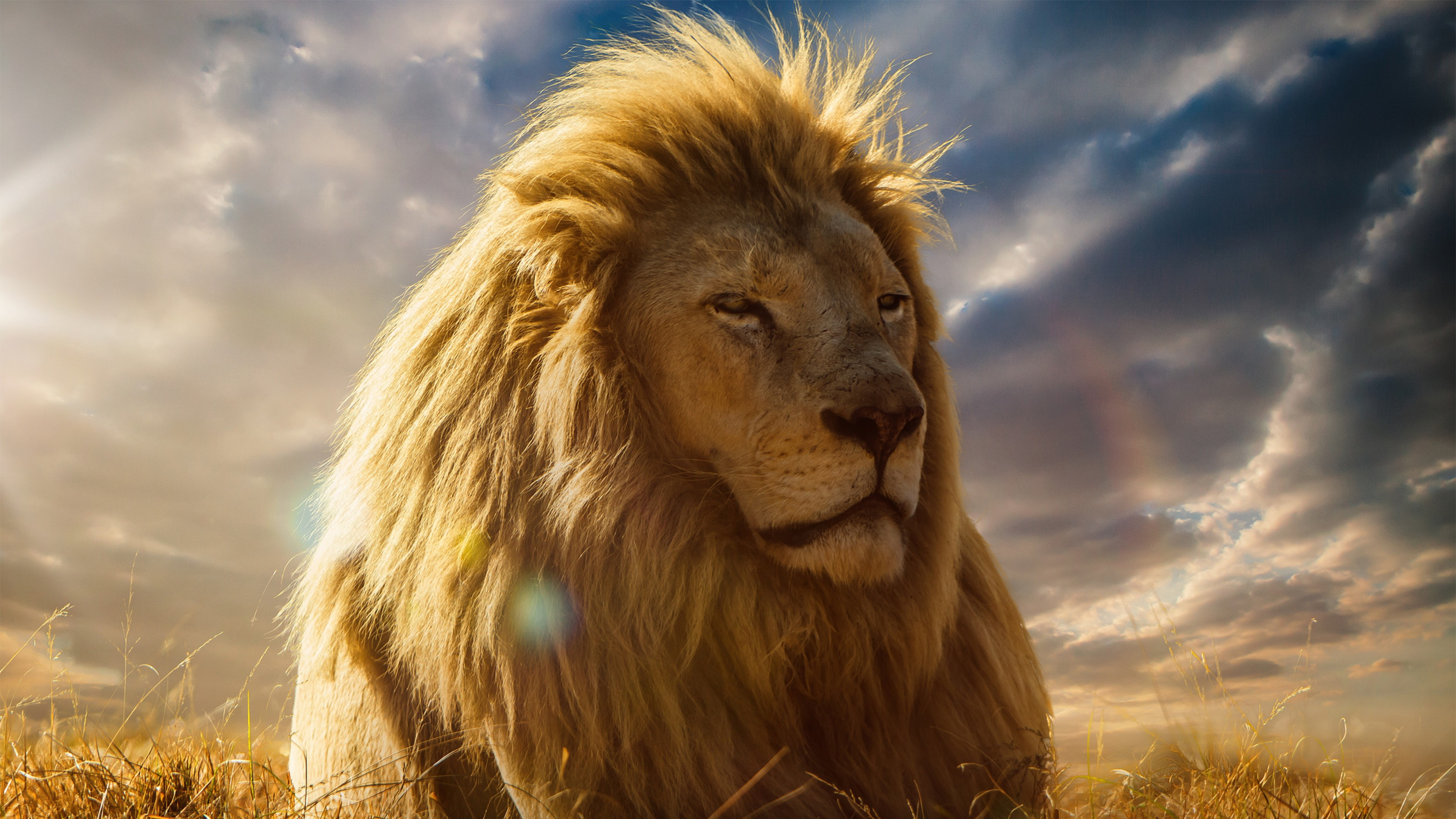 Wallpapers Lion Pictures 81 Images