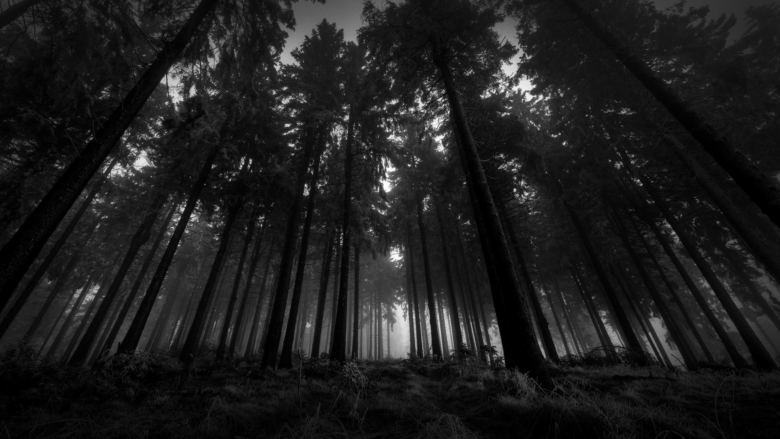2560x1440 Dark Forest HD Desktop Background Wallpaper - HD Wallpapers