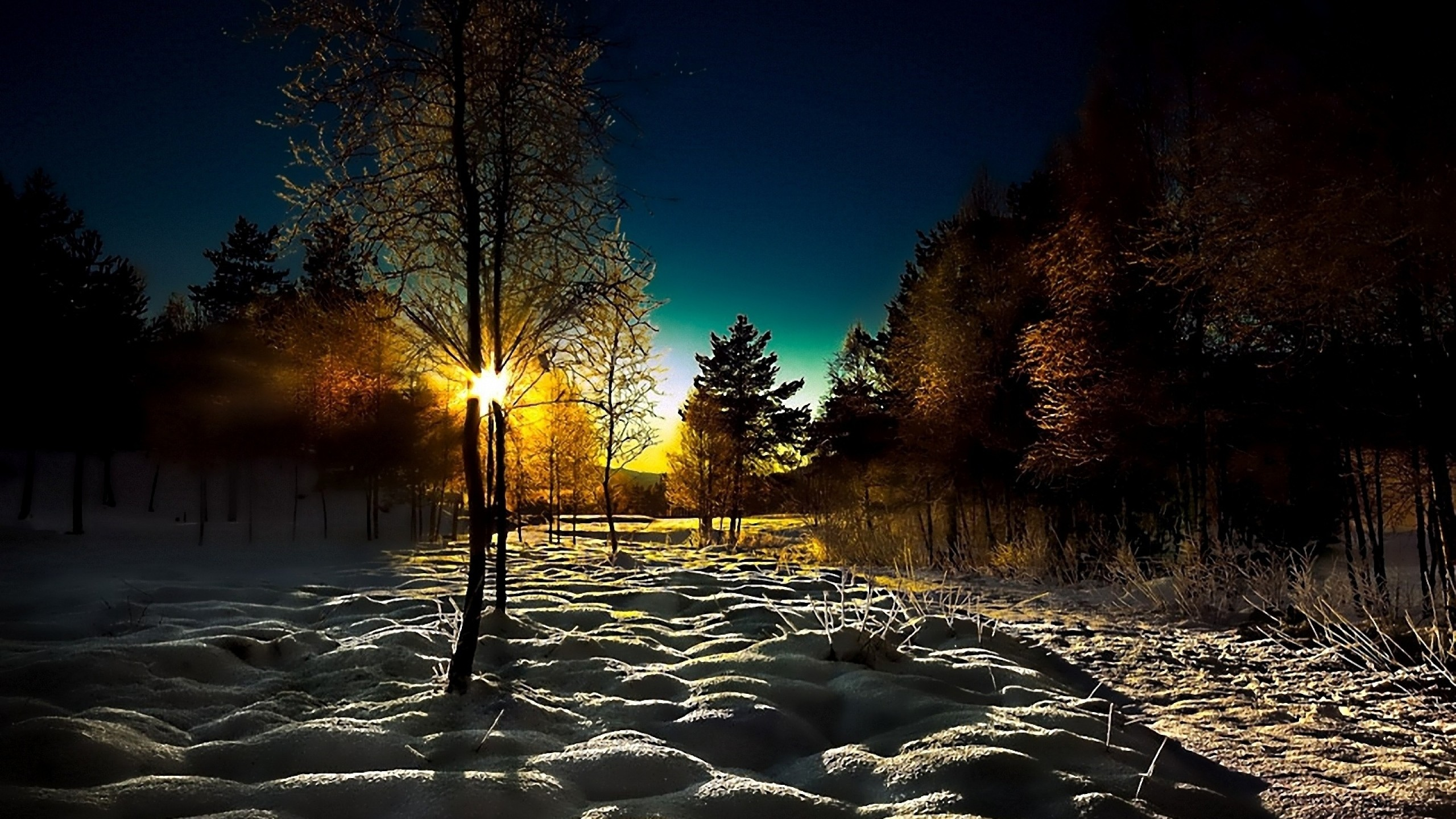 2560x1440 Preview wallpaper winter, wood, young growth, dawn, morning, shadows, cover