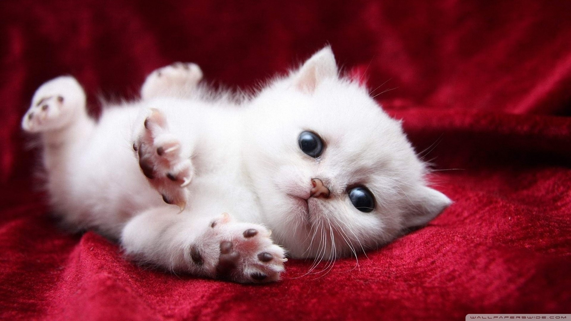 Kitty Cat Wallpaper 72 Images