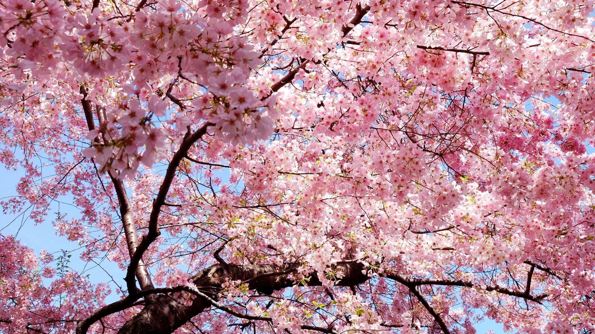 1920x1080 2577 Spring Landscape Nature Wallpaper Download