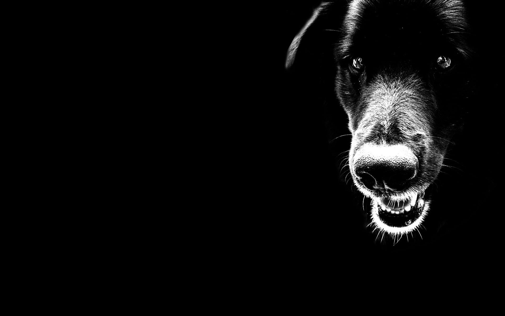 1920x1200 black dog wallpaper download. black and white hd wallpaper pictures 3D