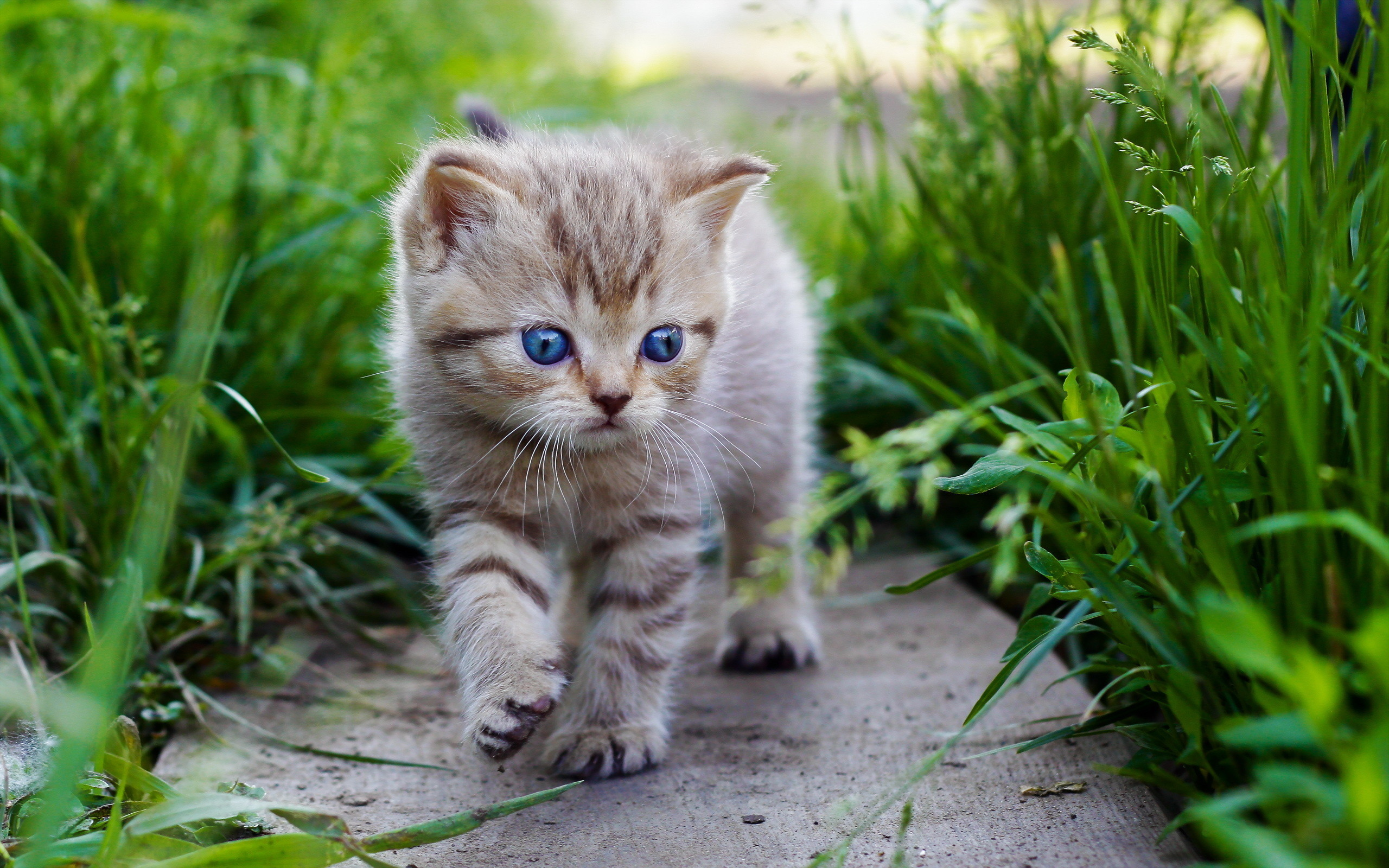 baby kittens wallpaper 63 images