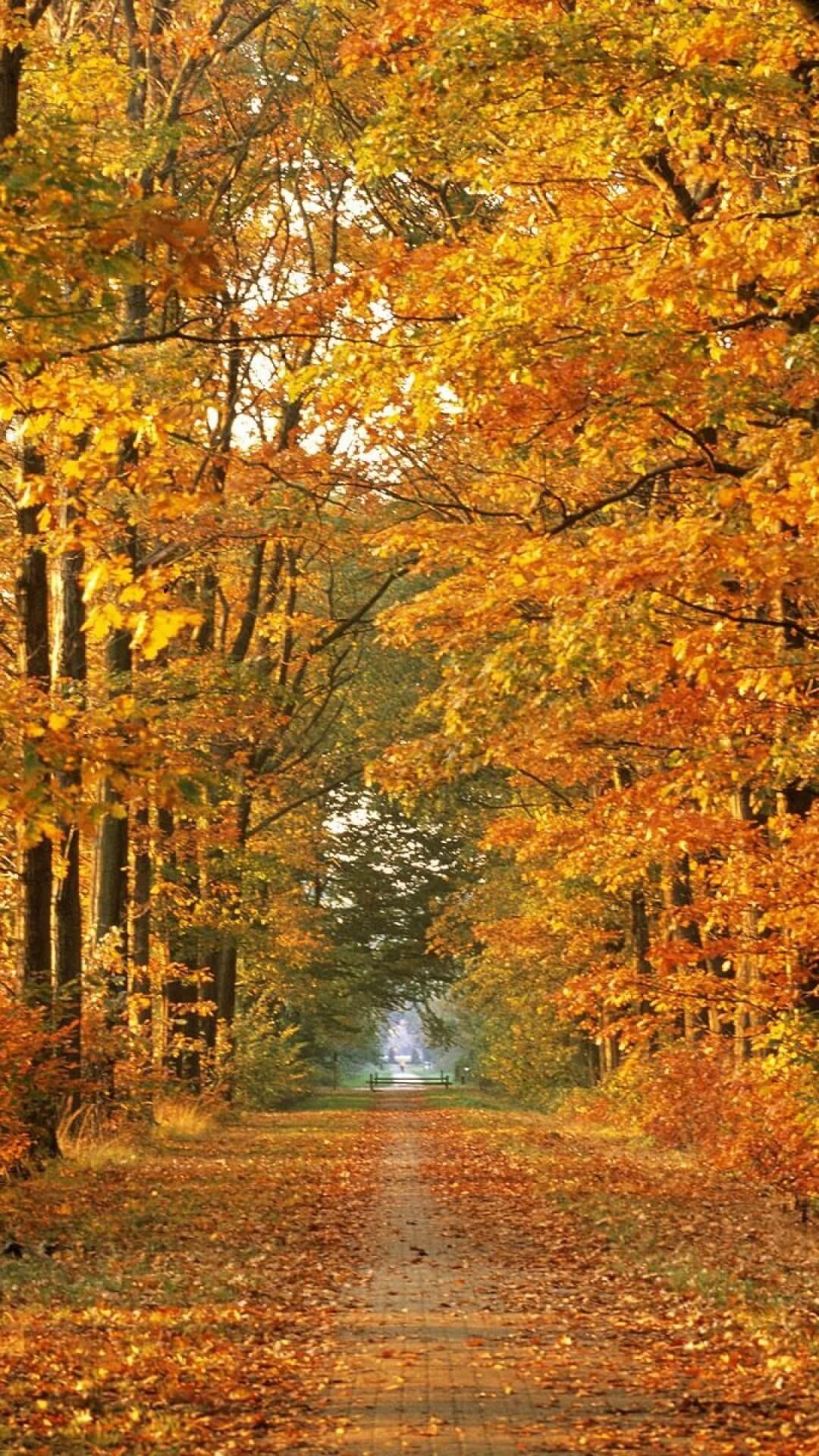 HD 1080p Fall Wallpaper (79+ images)