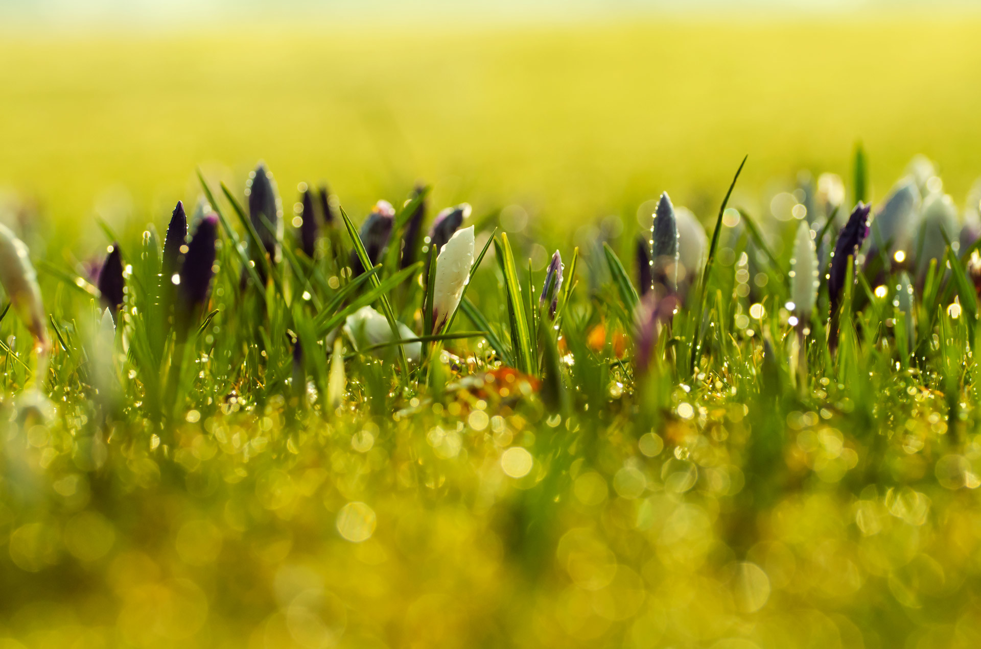 1920x1272 Spring Flowers Background