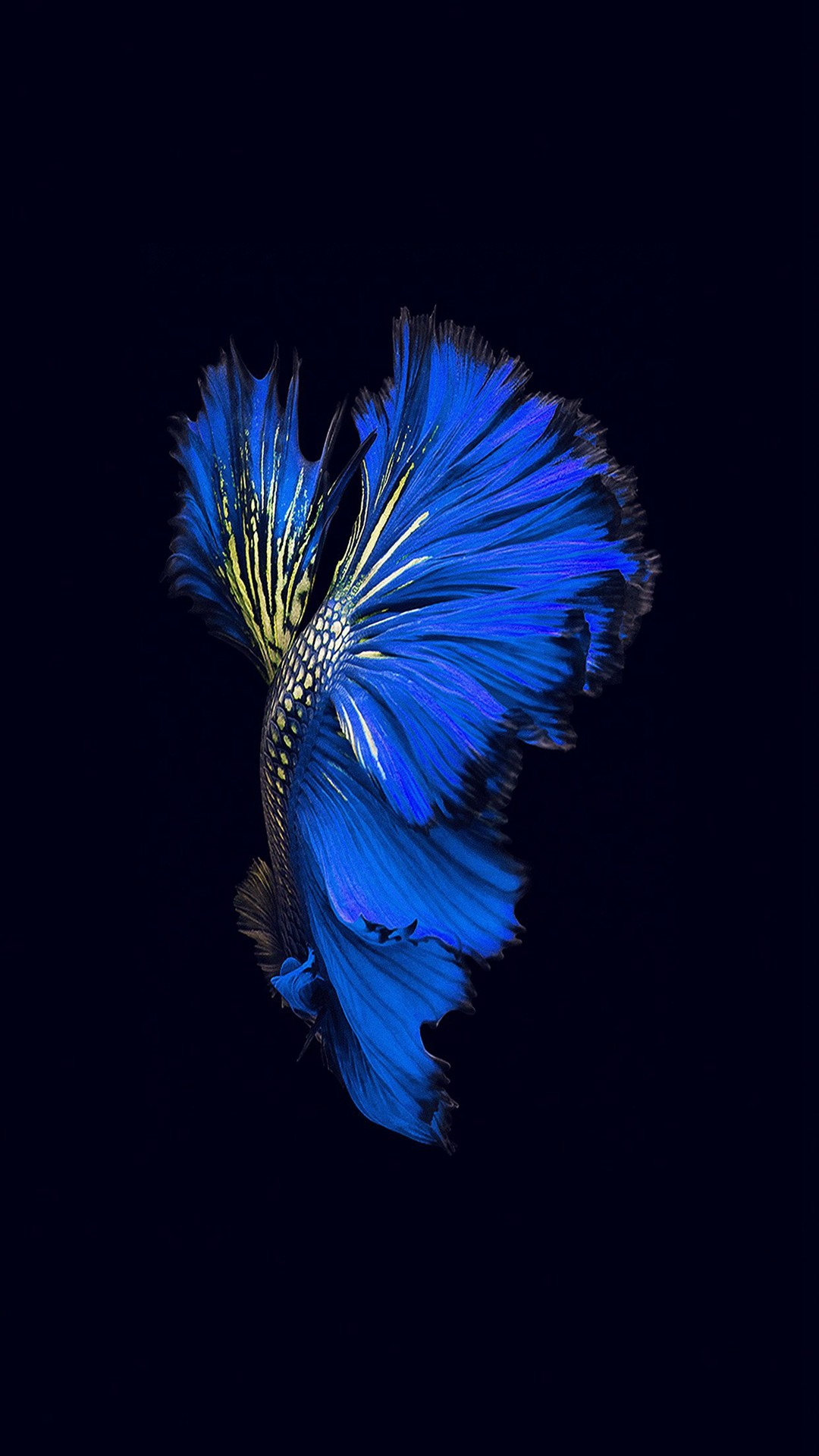 19011c18fe0 1080x1920 Apple Ios9 Fish Live Background Dark Blue iPhone 6 wallpaper