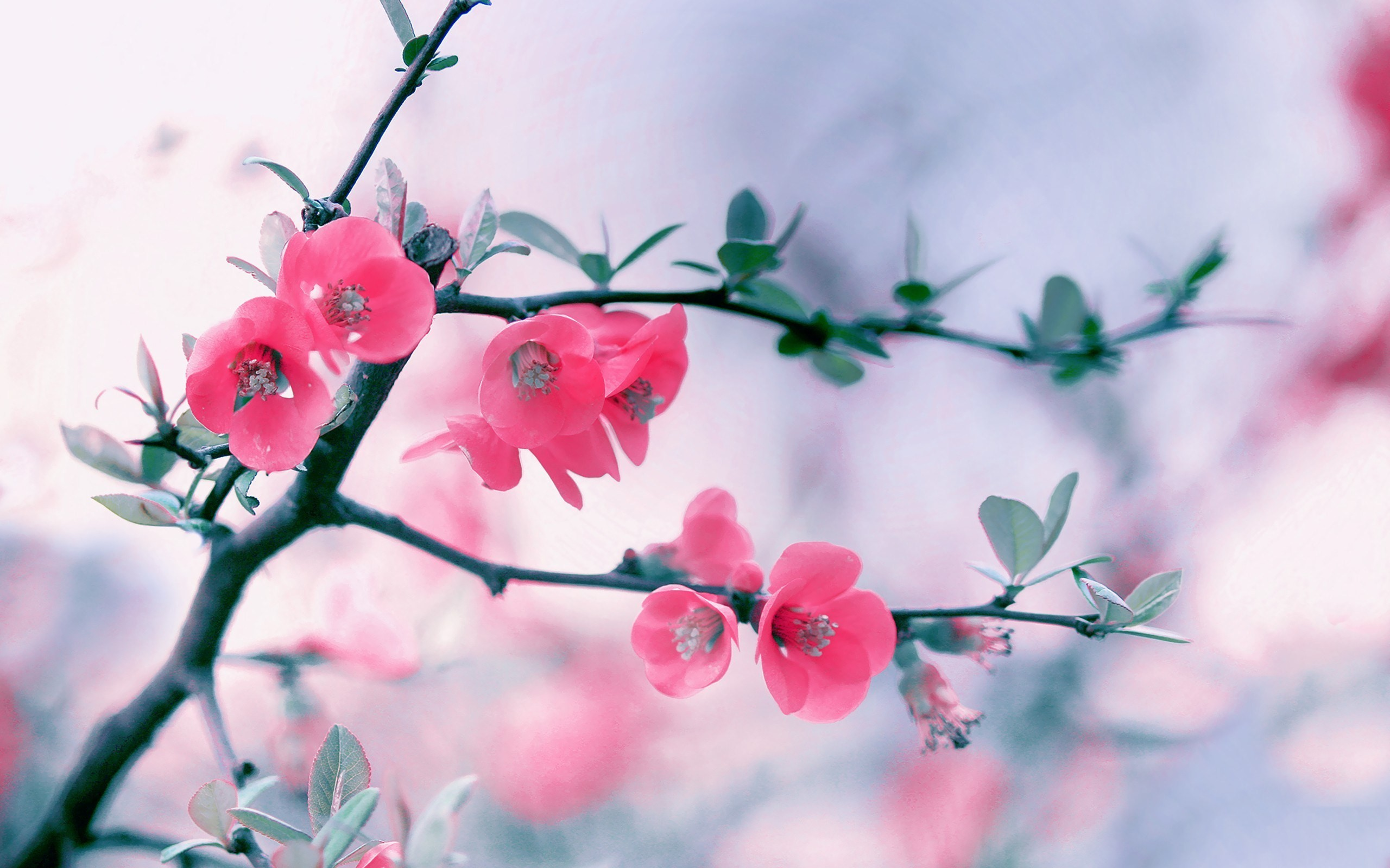 2560x1600 Pink Flowers Background HD.