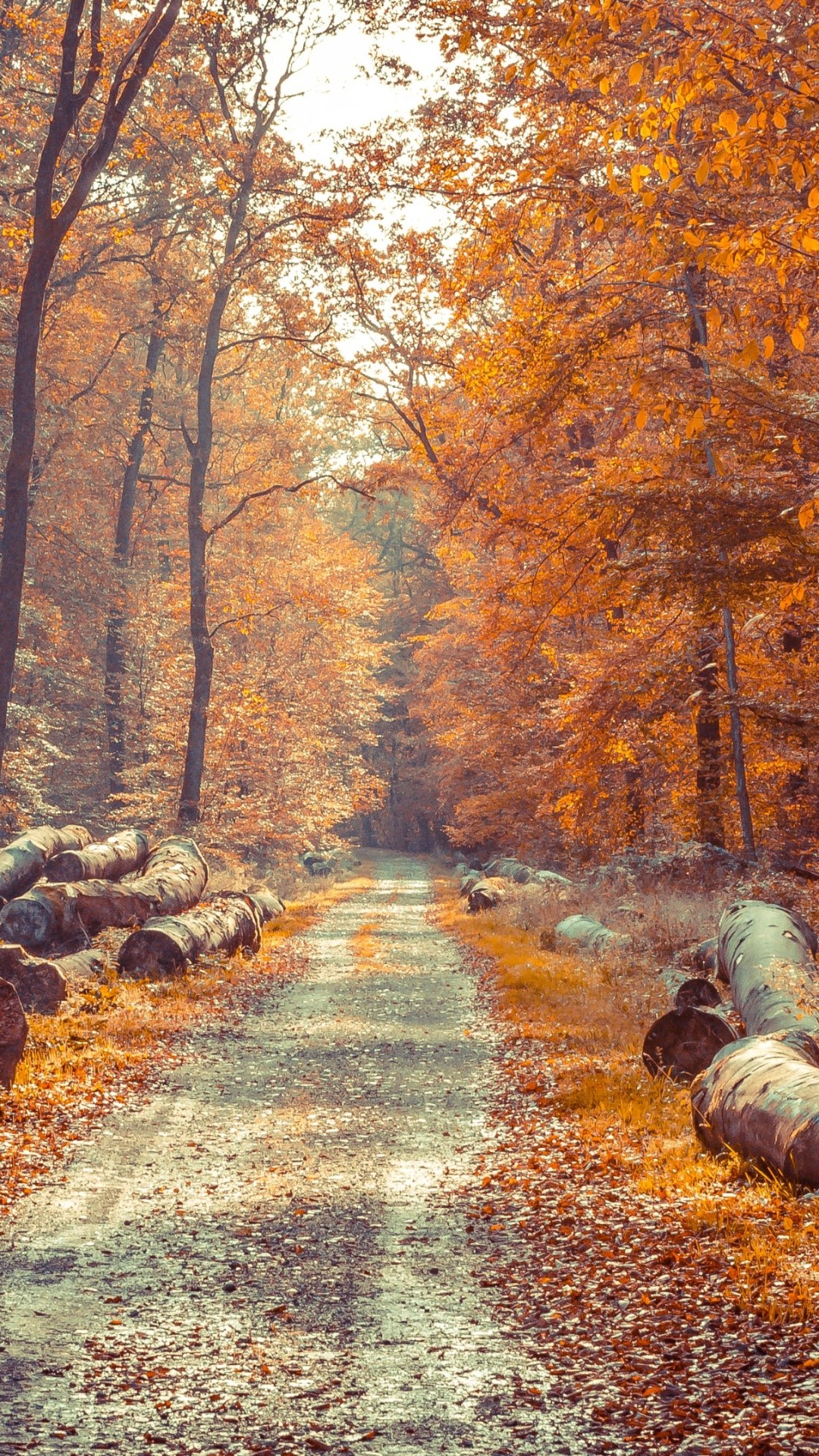 foto de IPhone 6 Autumn Wallpaper (87+ images)