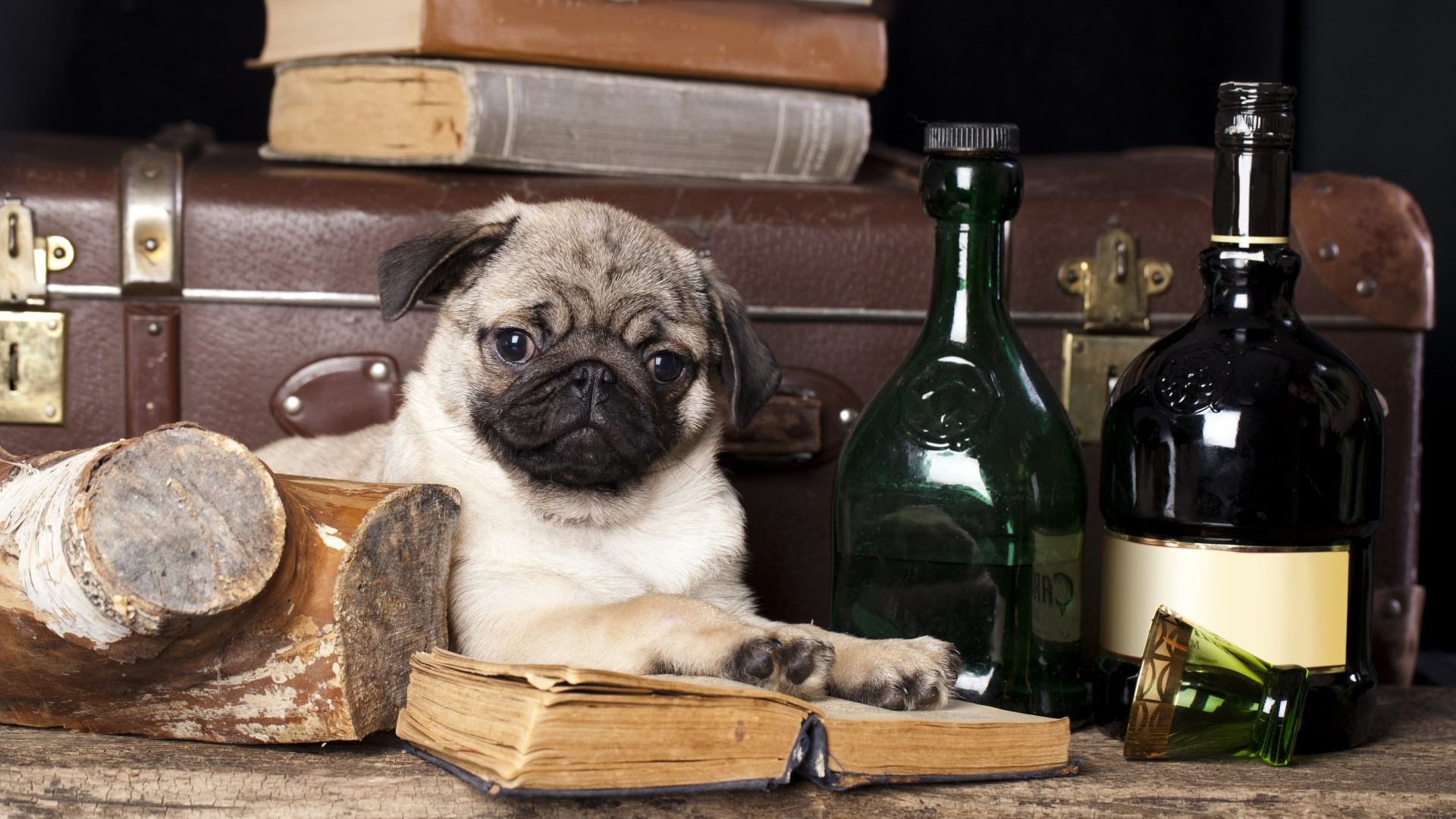 1920x1080 Download now full hd wallpaper pug gentleman book bottle dog ...