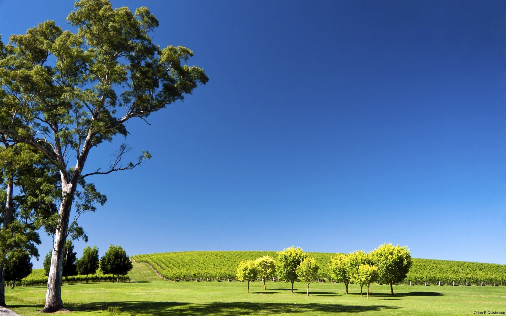 1920x1200 Hills landscapes nature south australia vineyard wallpaper