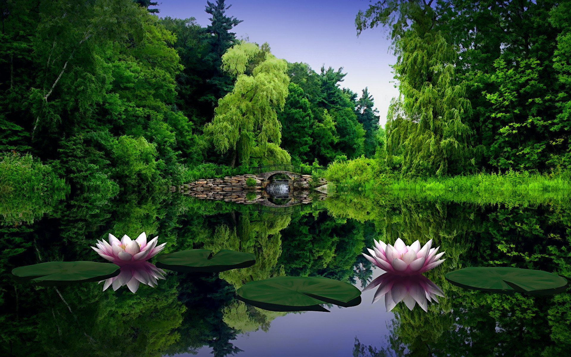1920x1200 Lotus Flower Pond