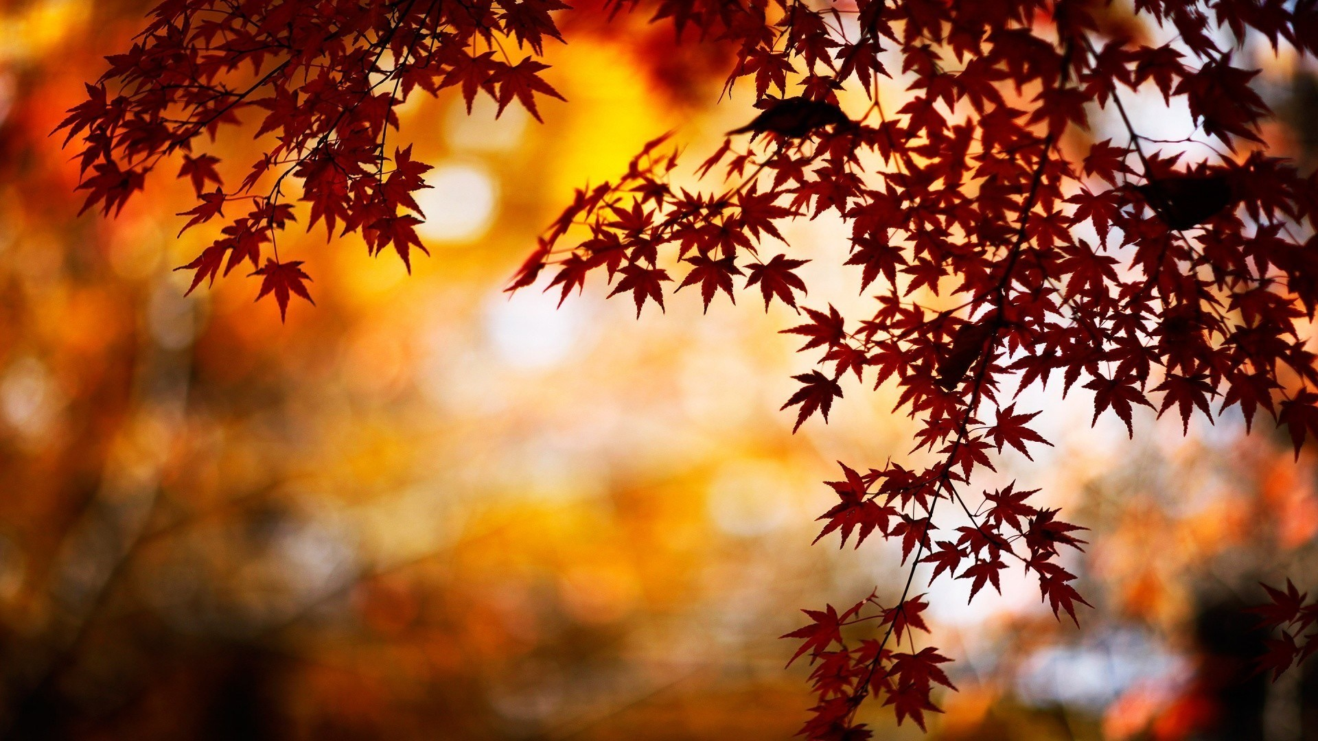 Res: 1920x1080,  Fall Leaves Wallpapers,  – Wallpapers PC Gallery for PC  & Mac, Laptop, Tablet, Mobile Phone
