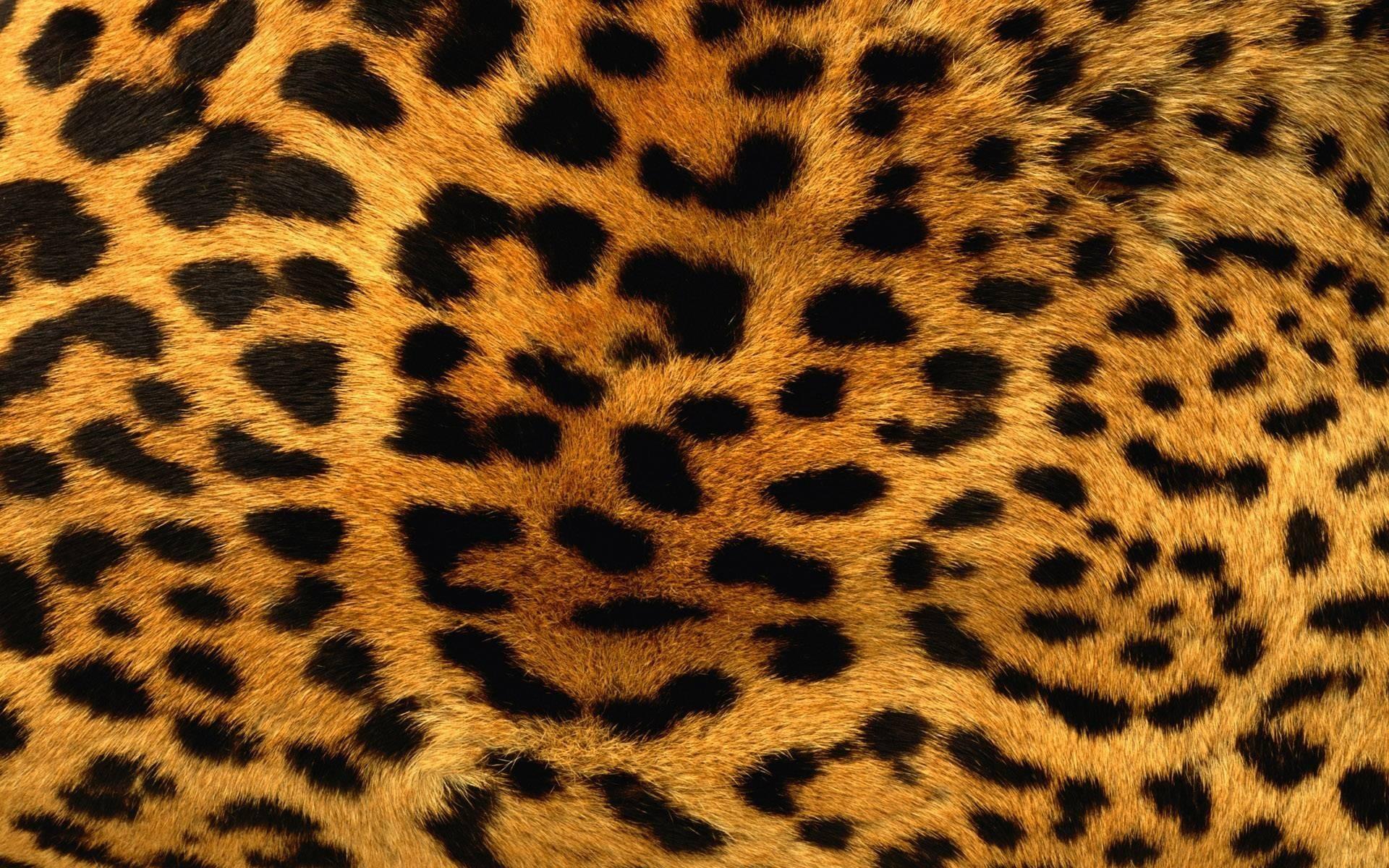 Animal Desktop Backgrounds 81 Images