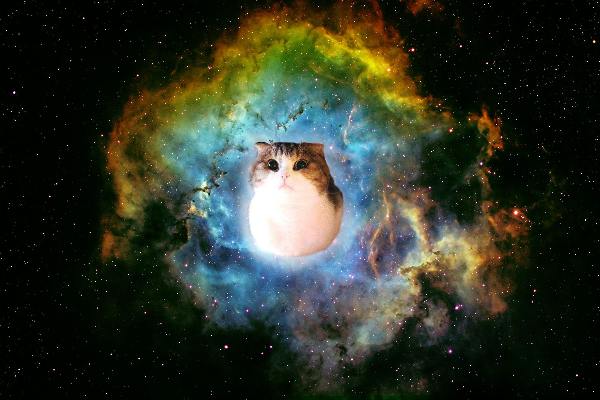2004x1336 Space Cat Wallpapers Hd Resolution ...