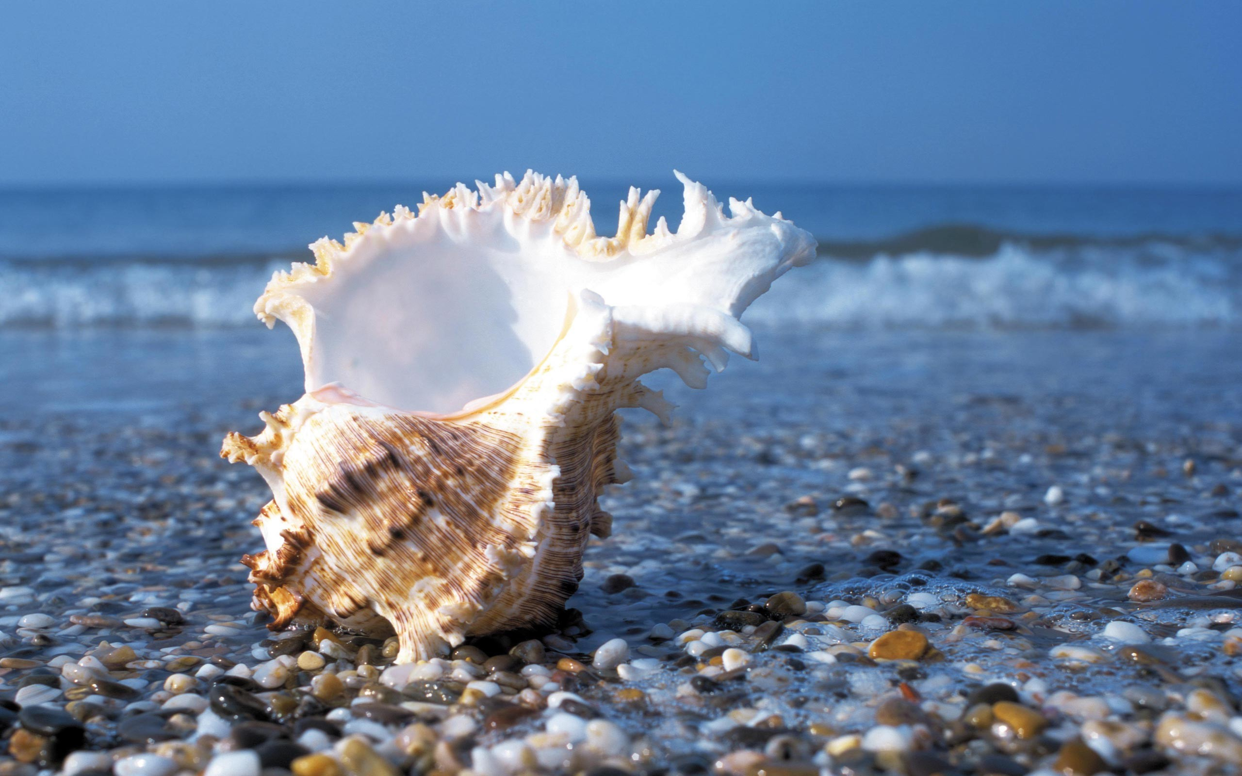 2560x1600 Sea Shell Wallpapers - Wallpaper Cave