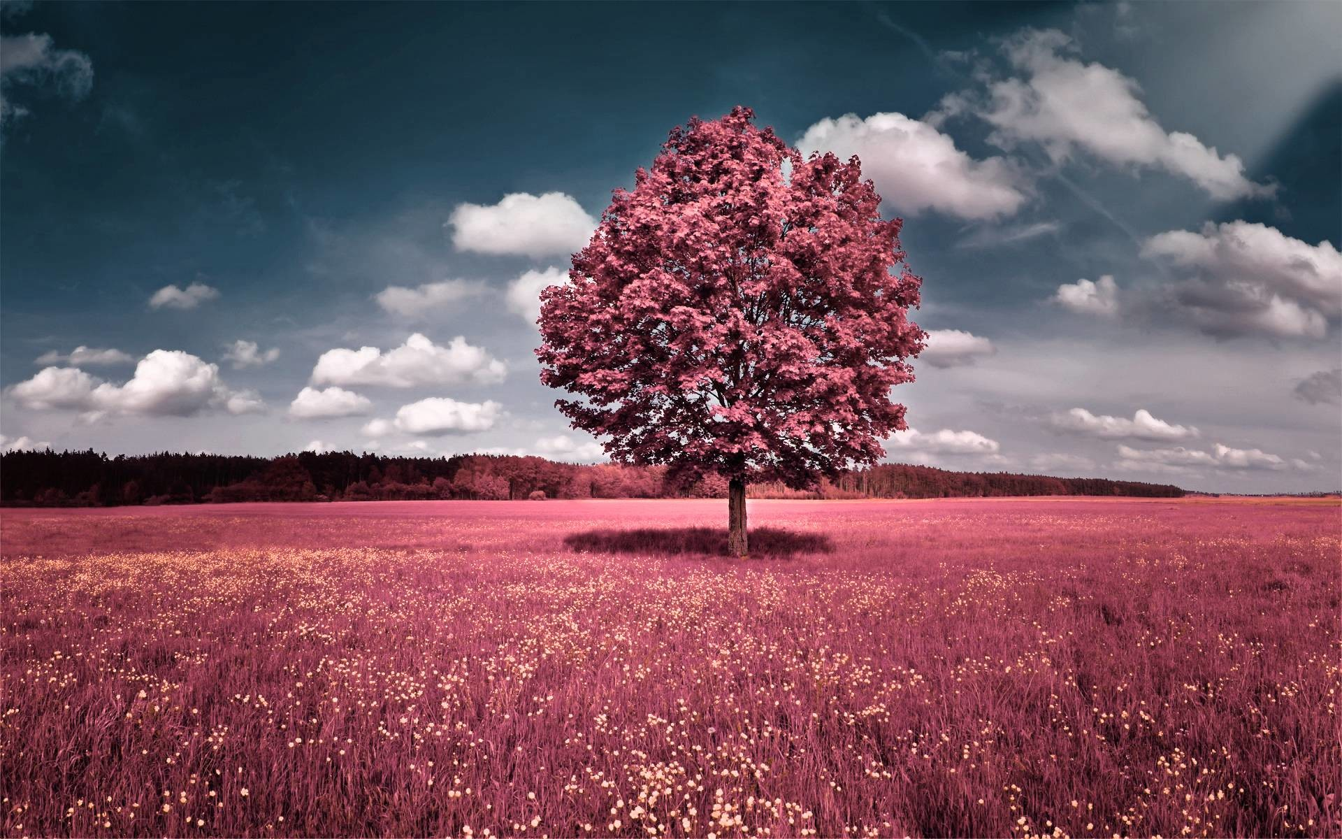 Pretty nature backgrounds 59 images - Pretty nature backgrounds ...