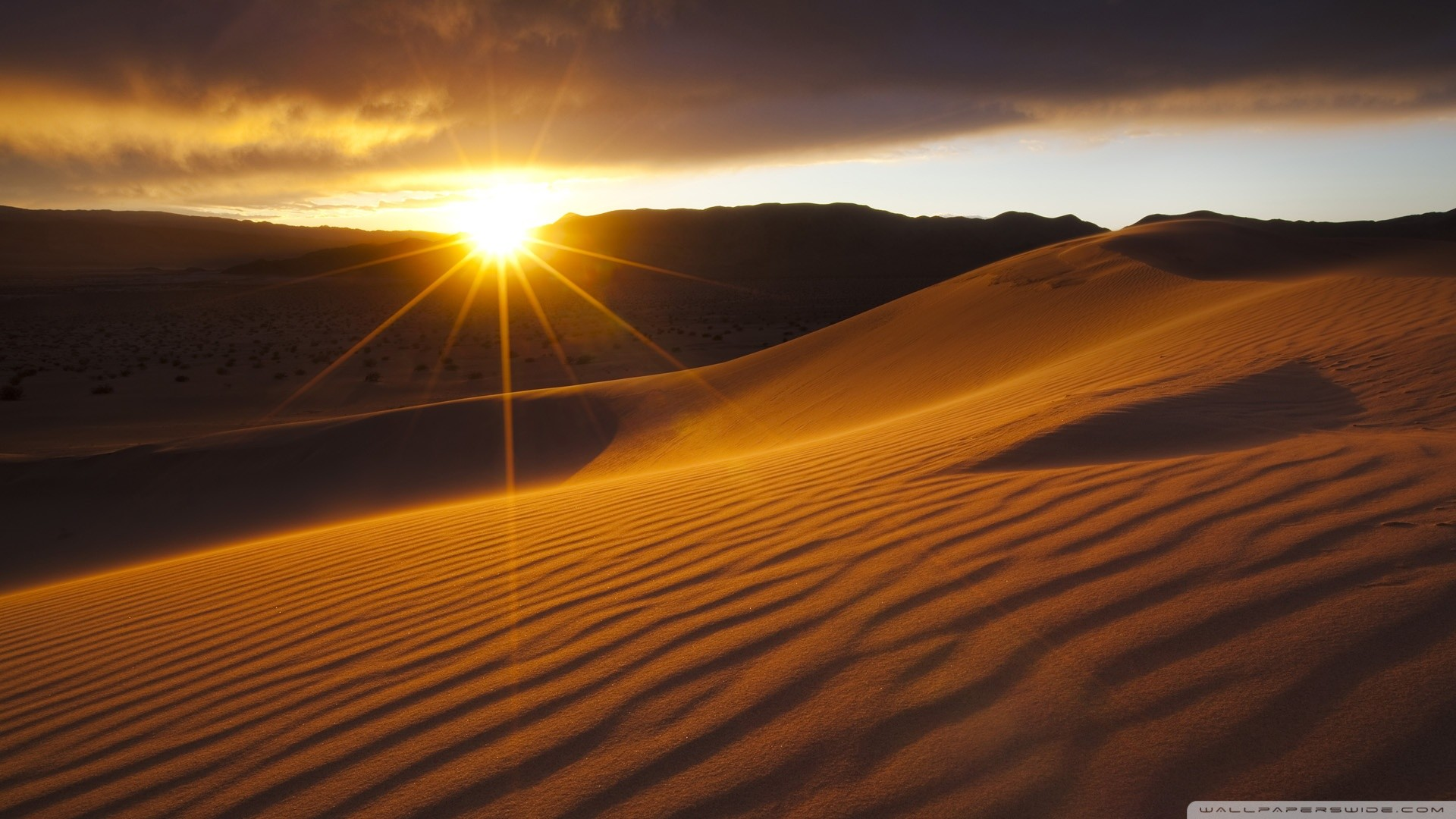 Desert Oasis Wallpaper (57+ images)