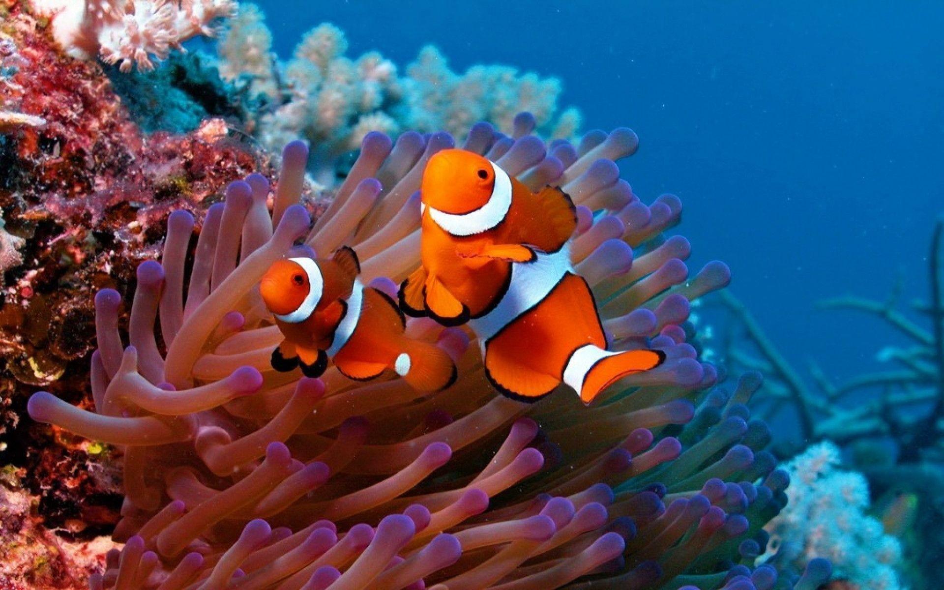 Fish Wallpaper and Screensavers (58+ images)