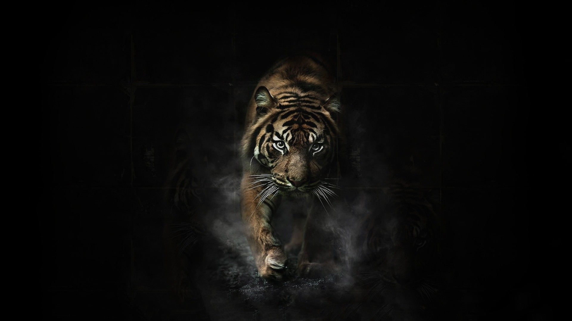 1920x1080 Tiger Wallpaper Full HD (65+ Images