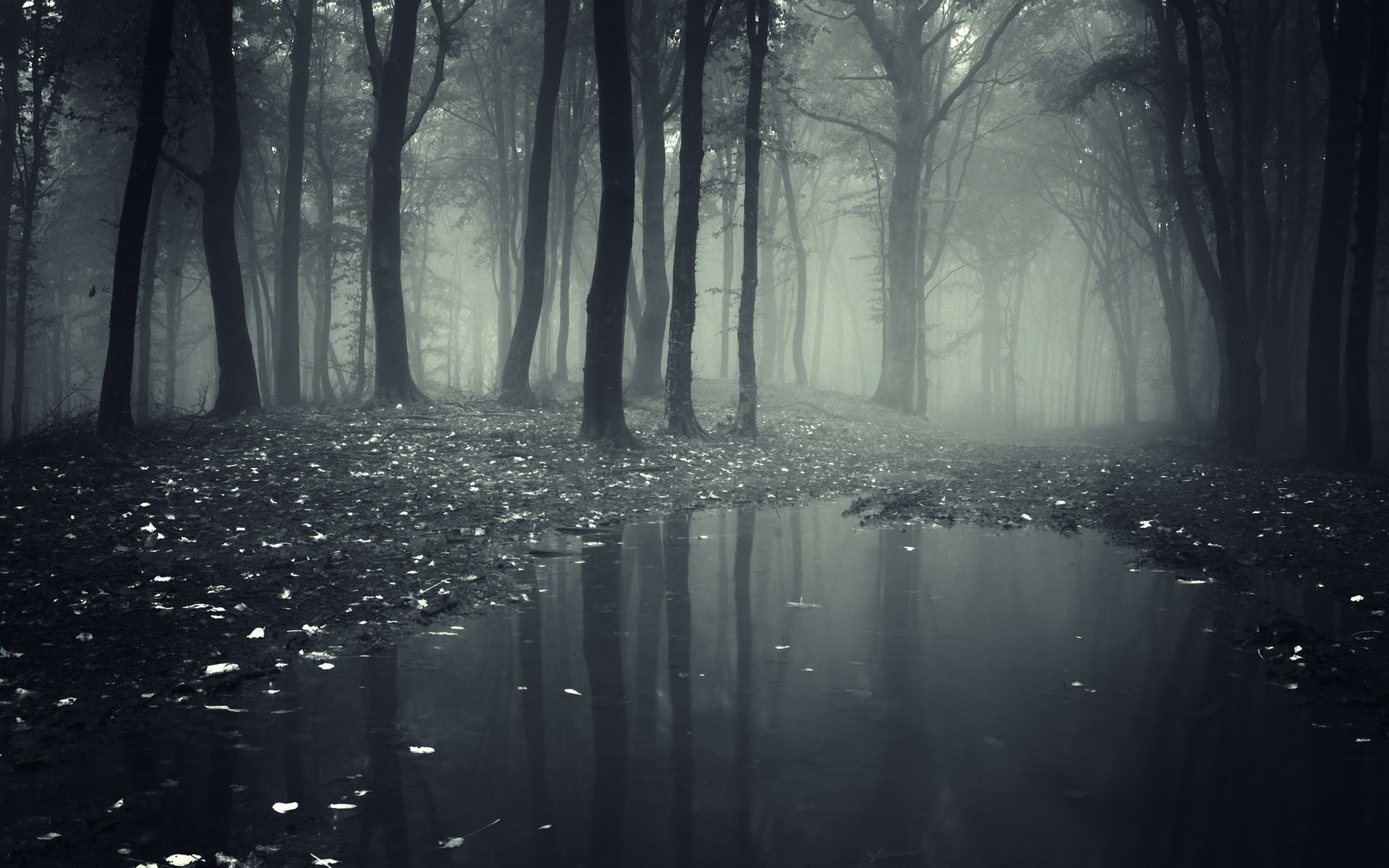 1920x1200 HD Wallpaper | Background ID:456839.  Dark Forest