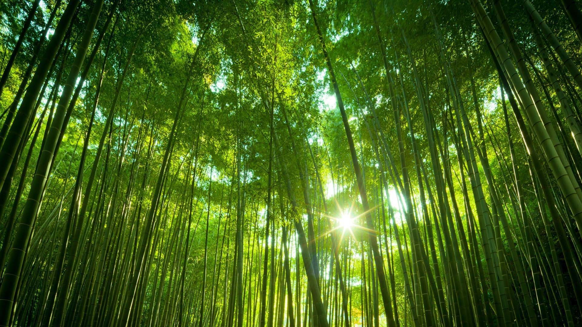 1920x1080 Bamboo Forest Wallpaper 3 HD Image Wallpaper