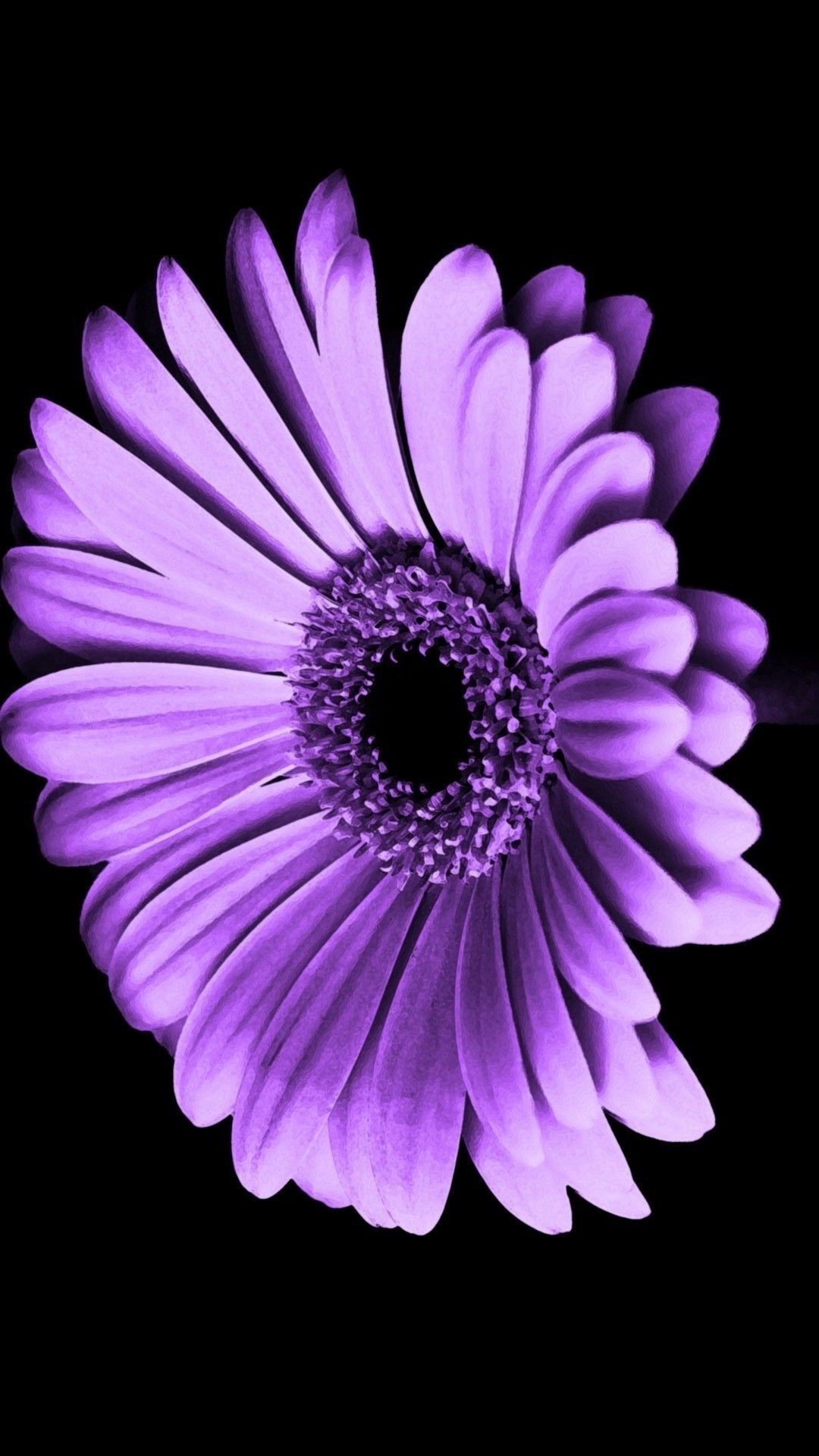 Purple Flower Wallpaper For Iphone 77 Images