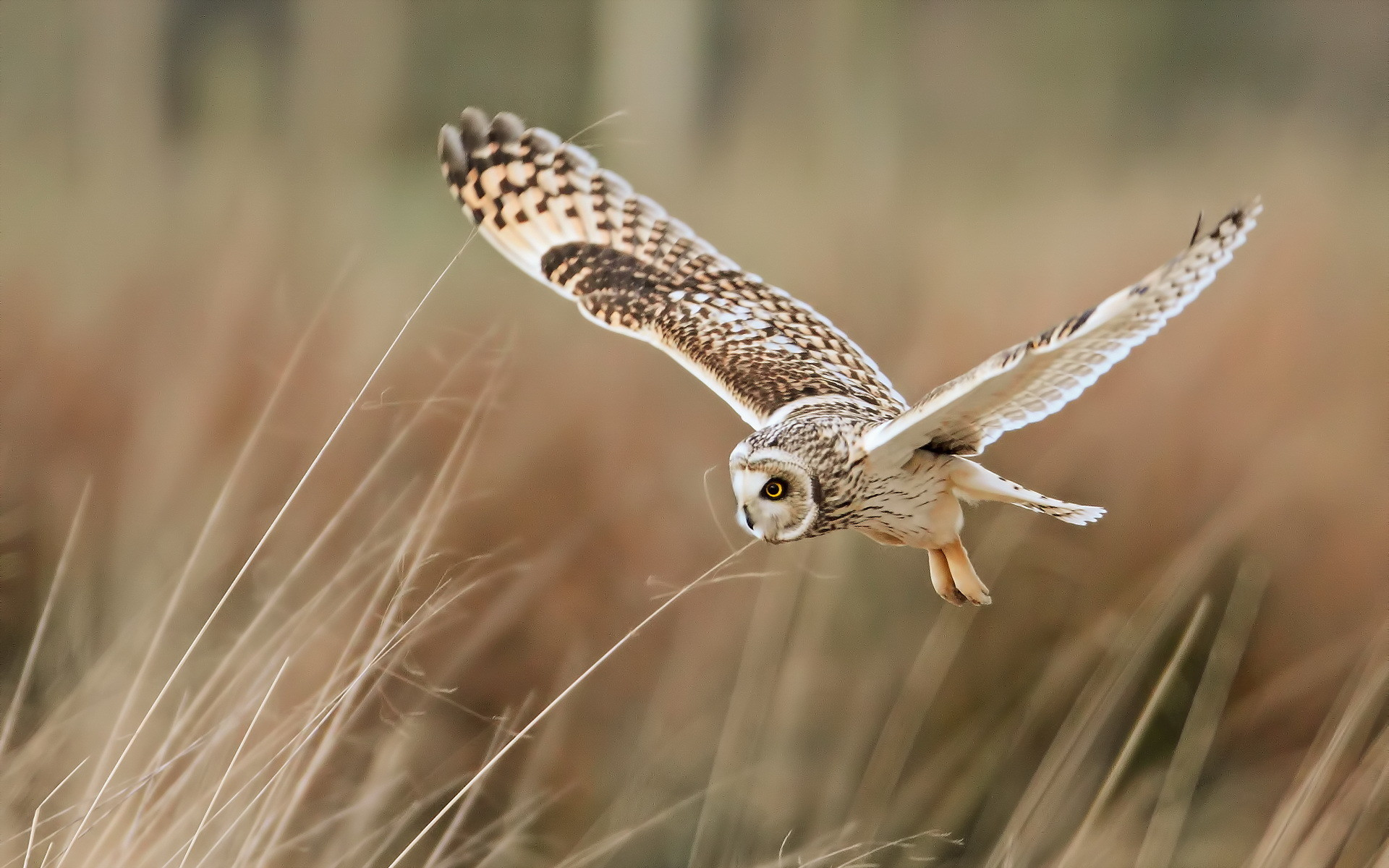 Owl Wallpaper Pictures 72 Images