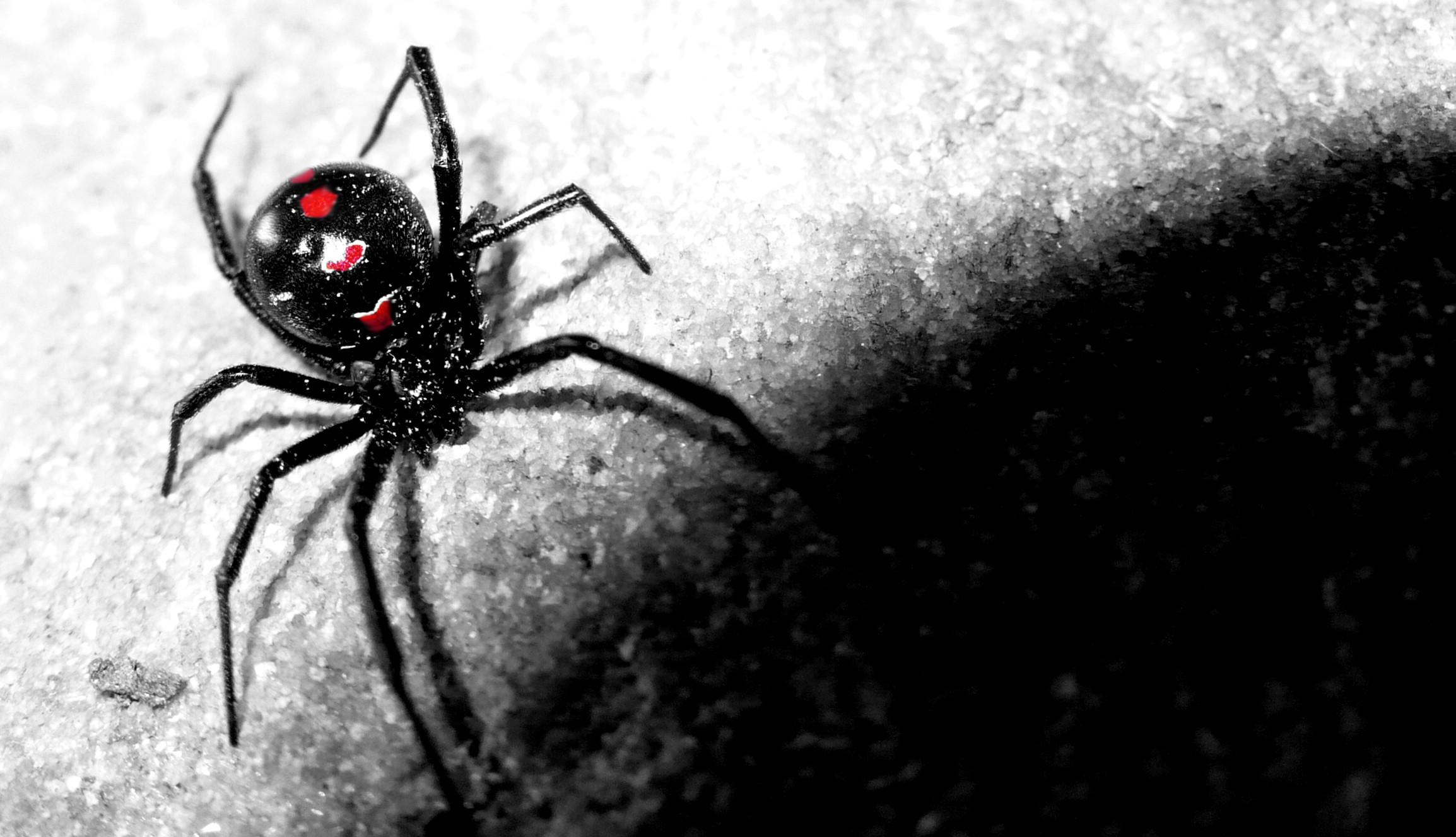 Black Widow Spider Wallpaper 72 Images