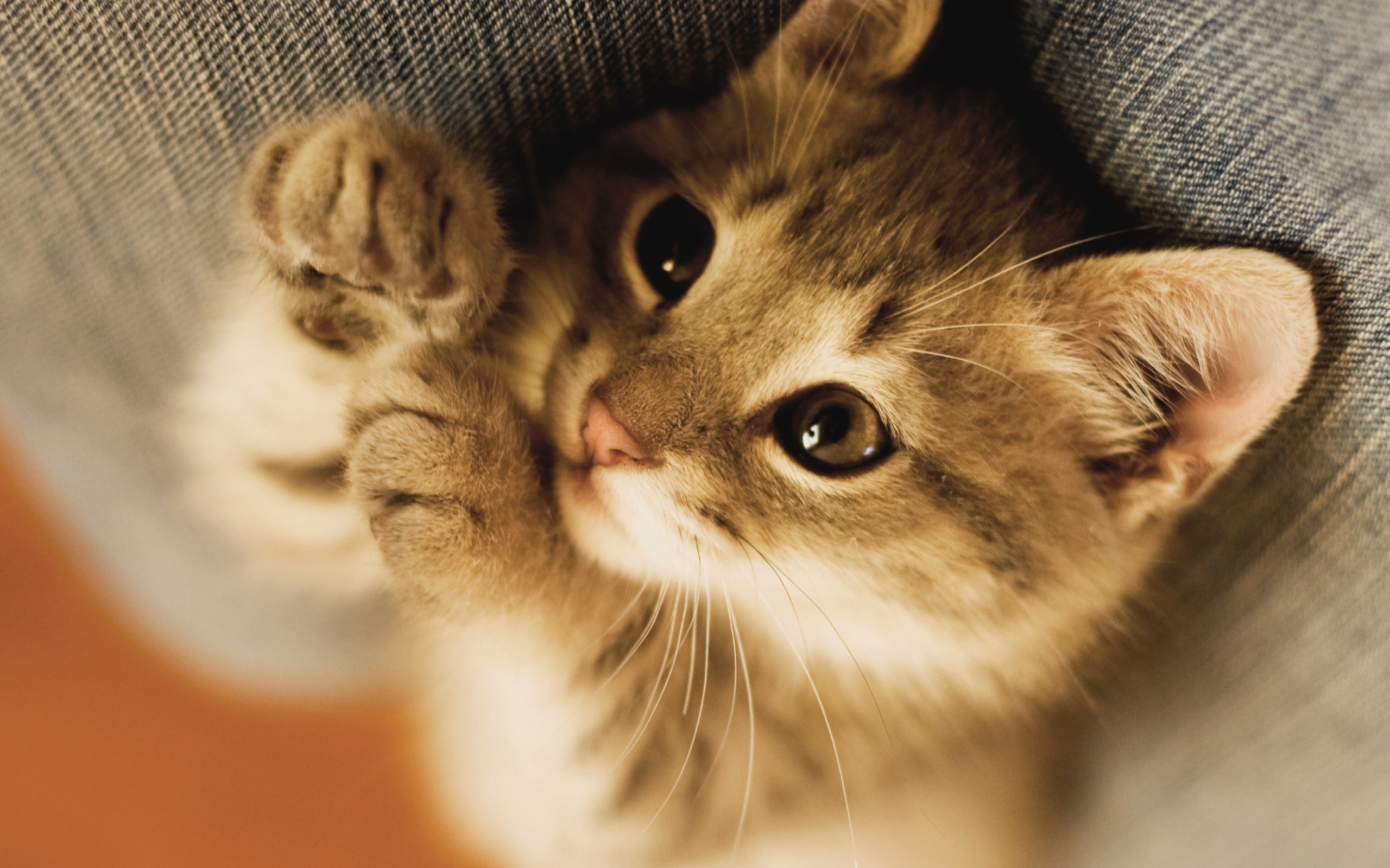 2560x1600 Image - Cats-and-kittens-wallpapers-hdkitten-cat-big-