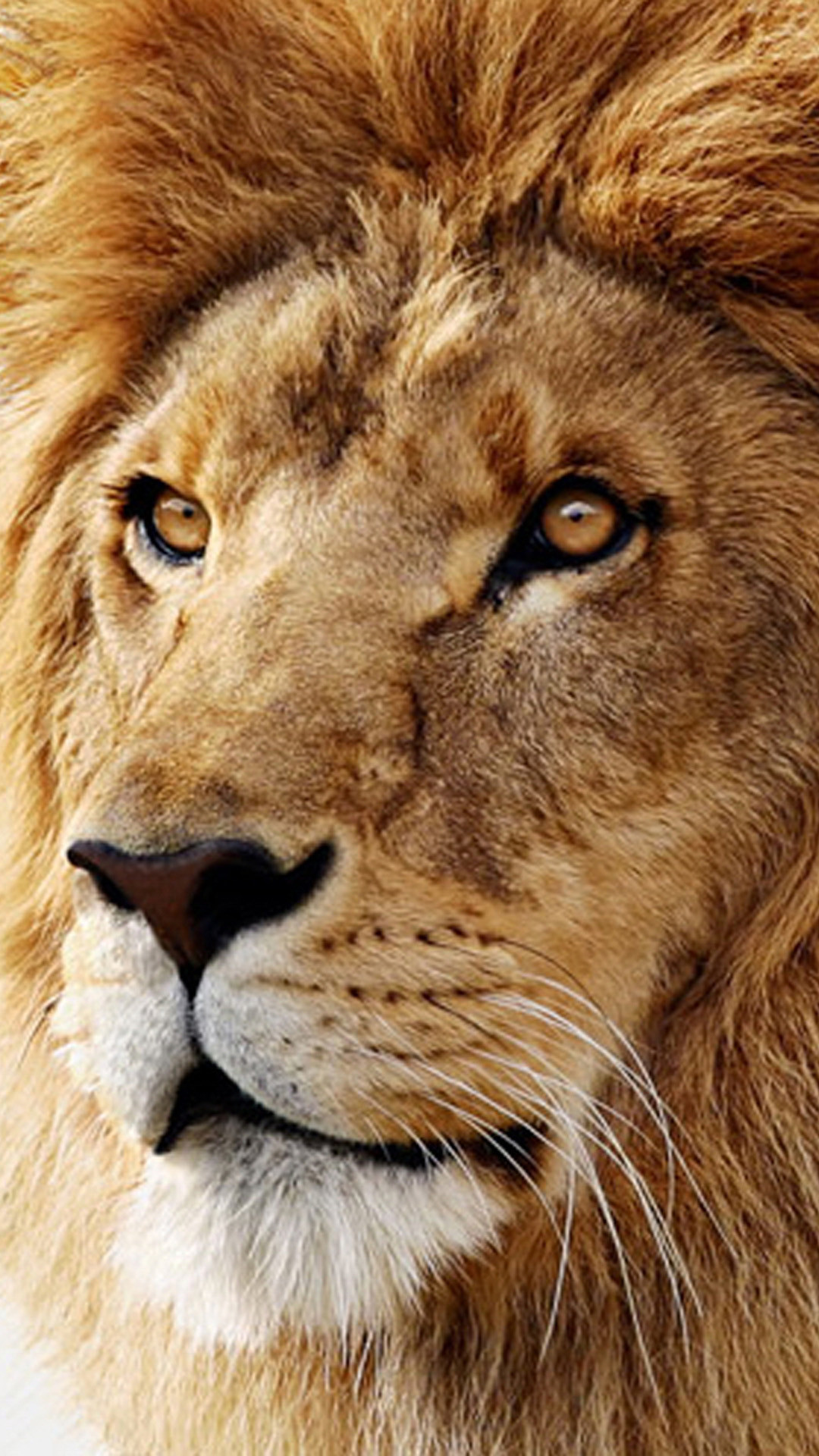 Lion Screensavers and Wallpaper (63+ images)