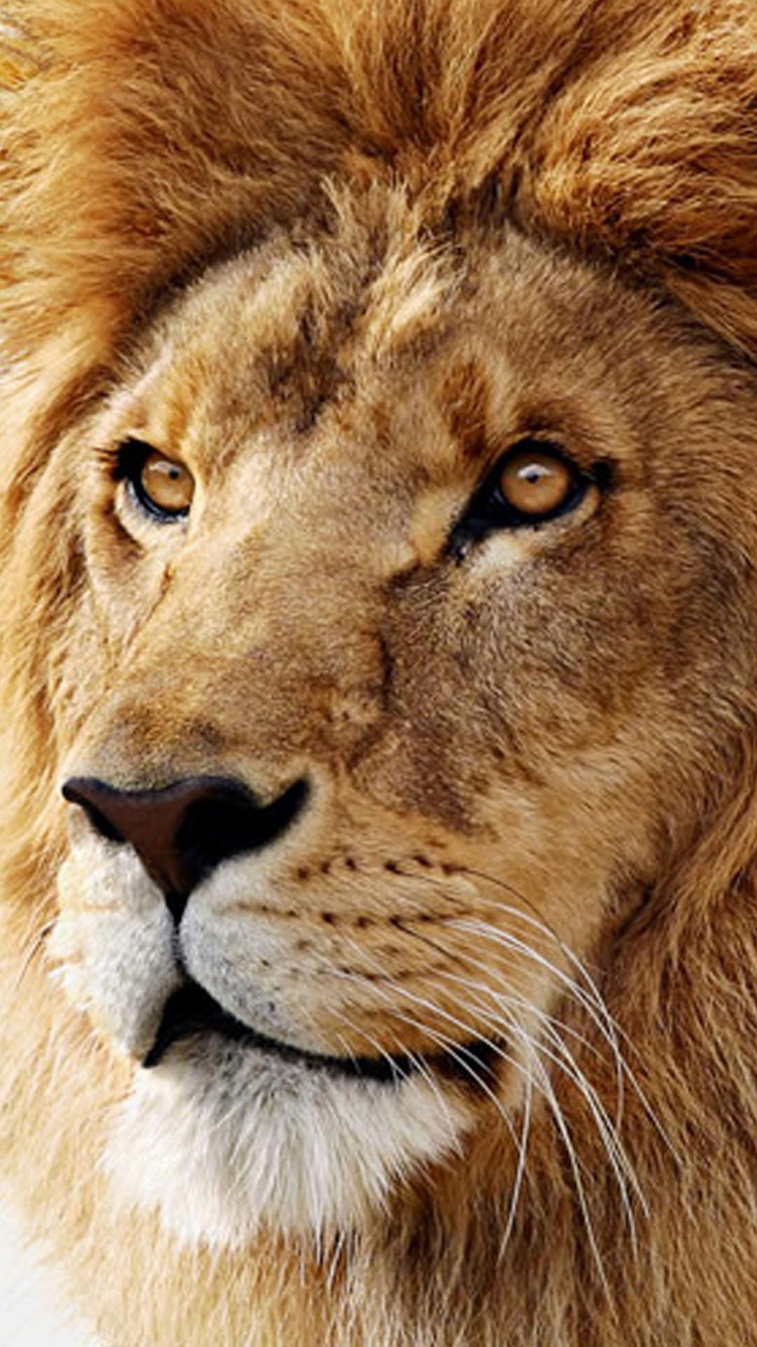 Wallpaper download lion - 1920x1200 Lion Hd Wallpapers Free Wallpaper Downloads Lion Hd Desktop 1920 1200 Lion Wallpaper