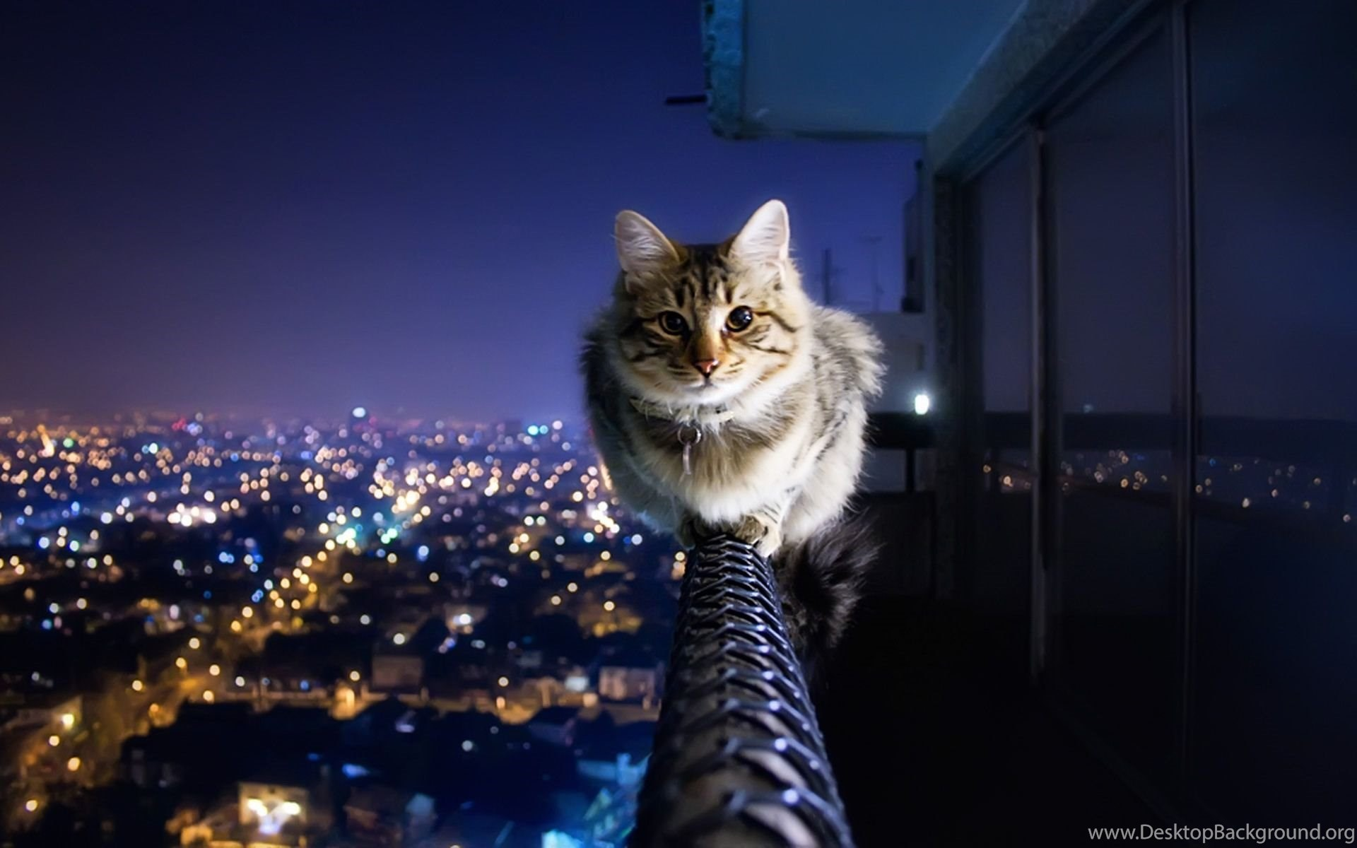 Cool Cat Wallpapers 71 Images