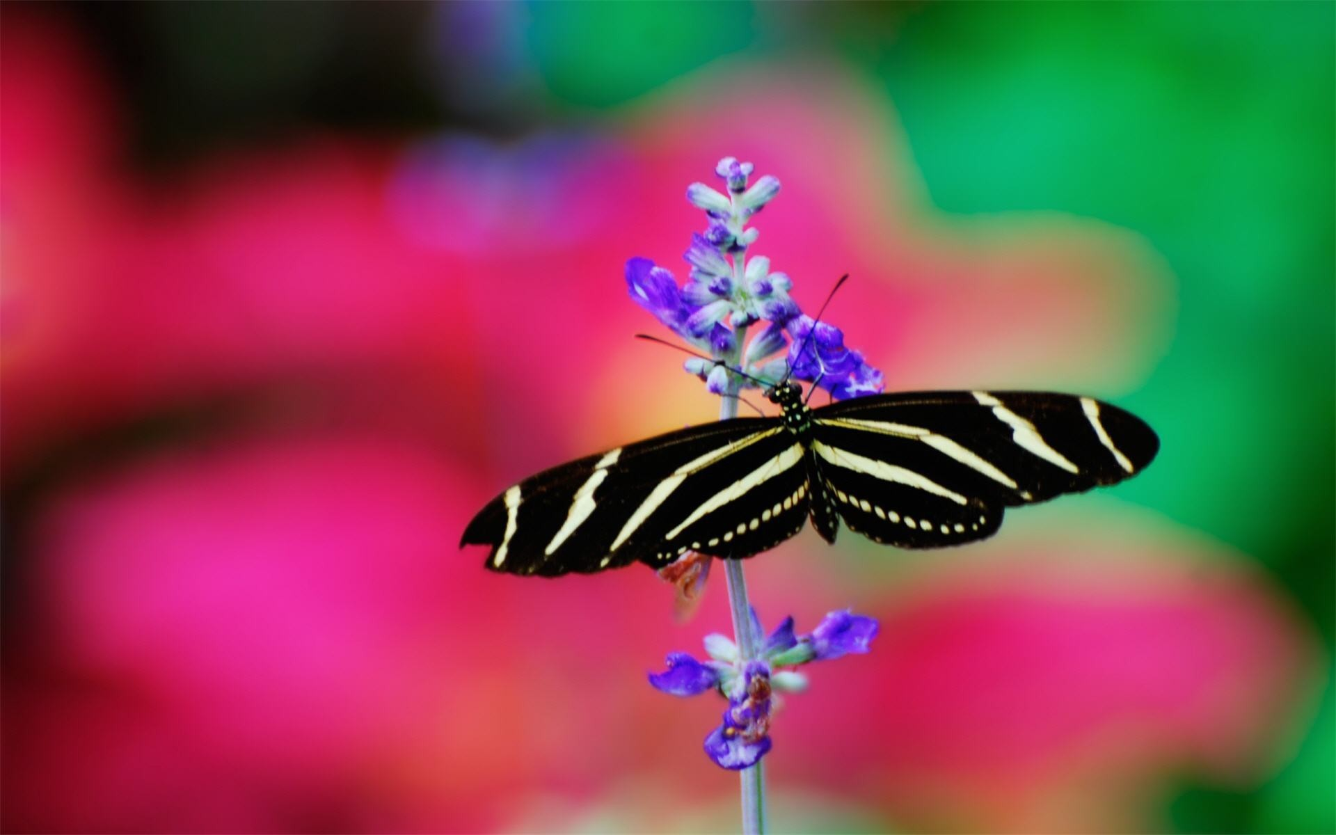 1920x1200 butterfly black and white wallpaper images with high resolution wallpaper  on animal category similar with 3d