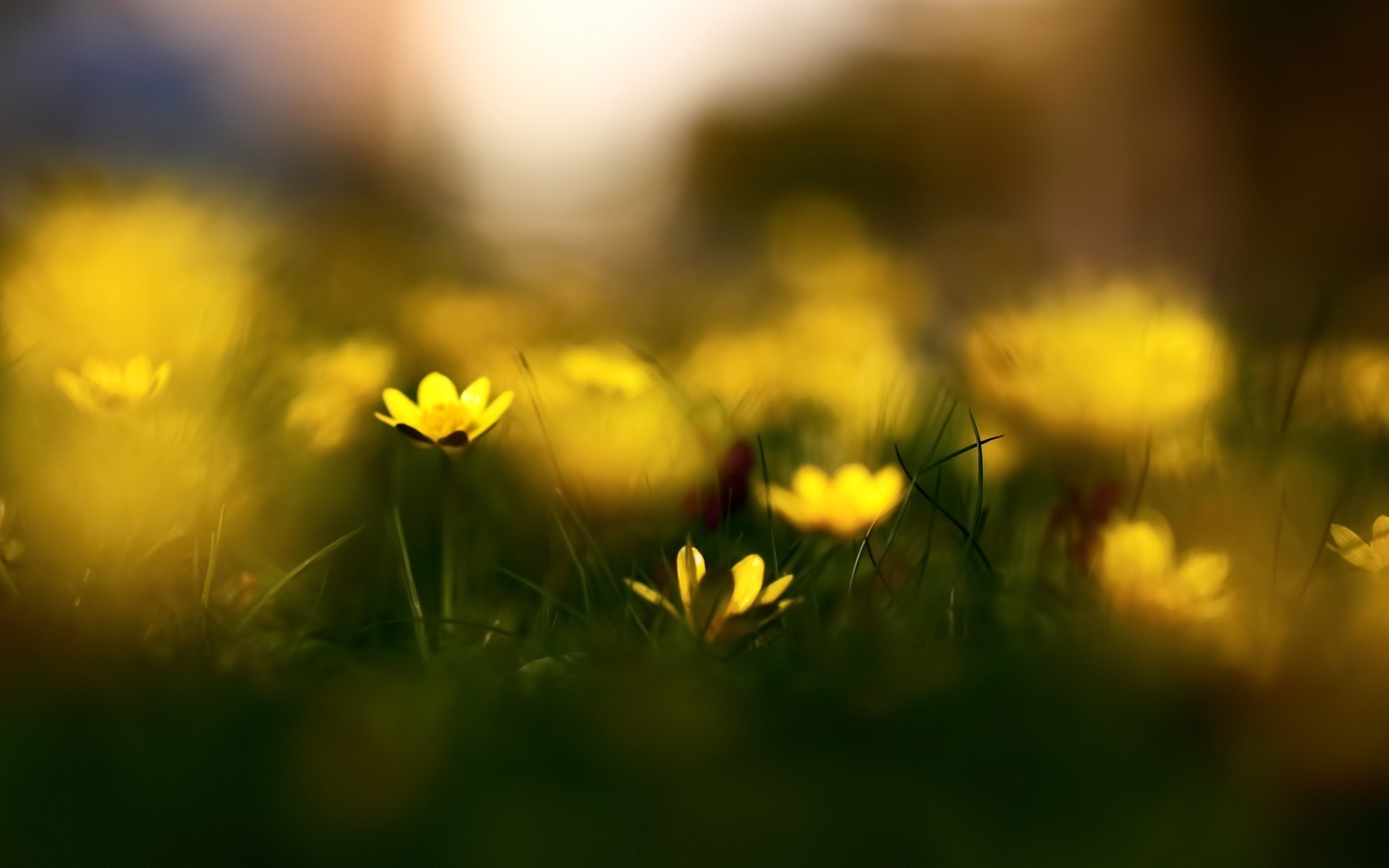 1920x1200 HD wallpapers Yellow flowers