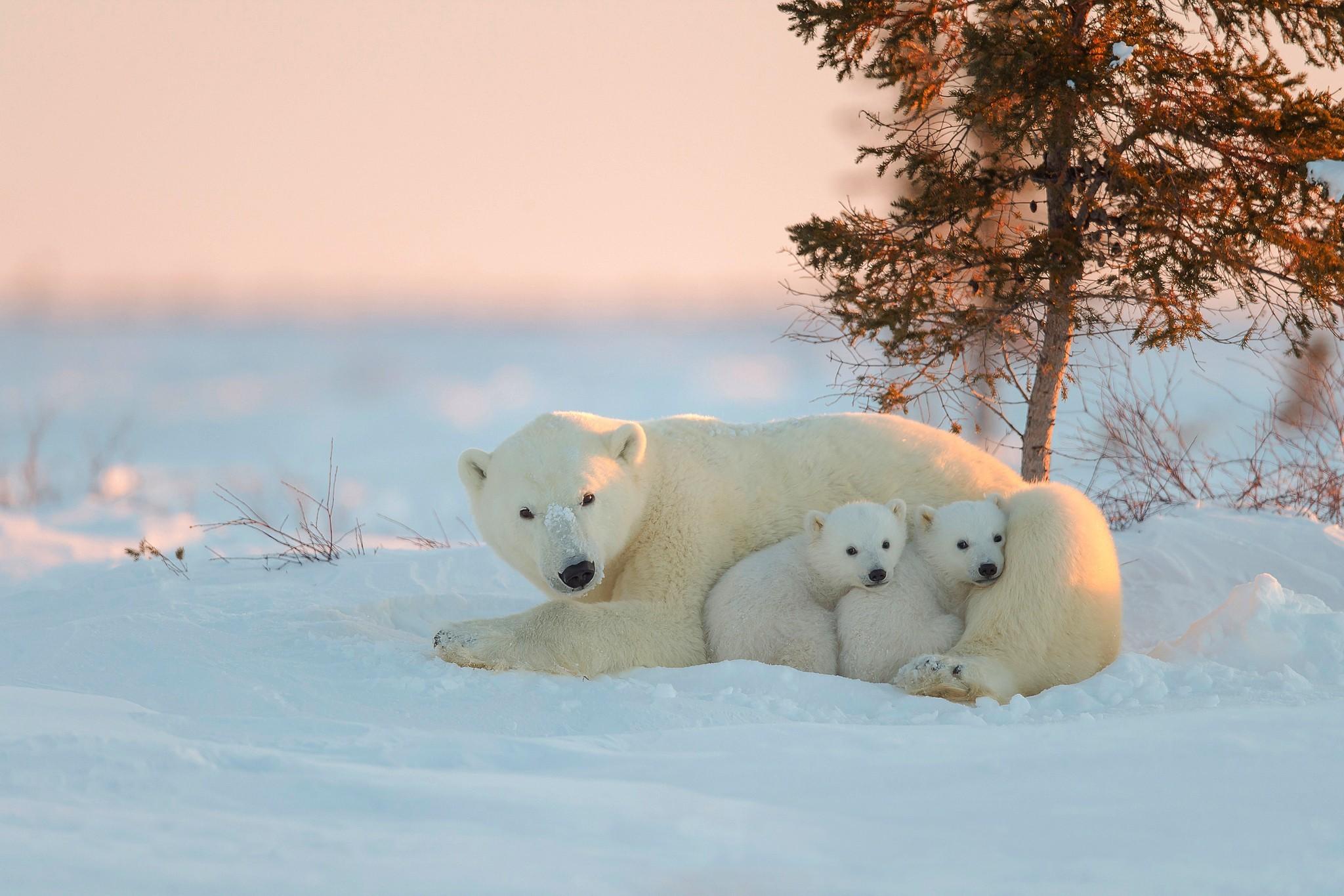 Happy baby polar bear