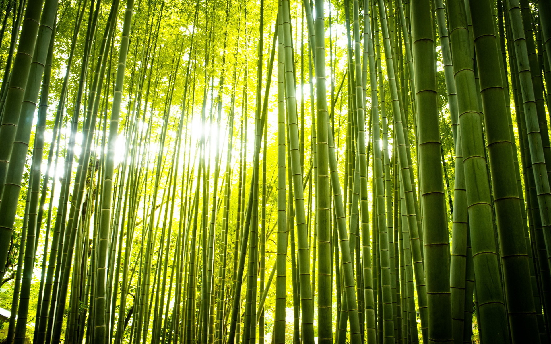 1920x1200 Gorgeous Bamboo Wallpaper 45258
