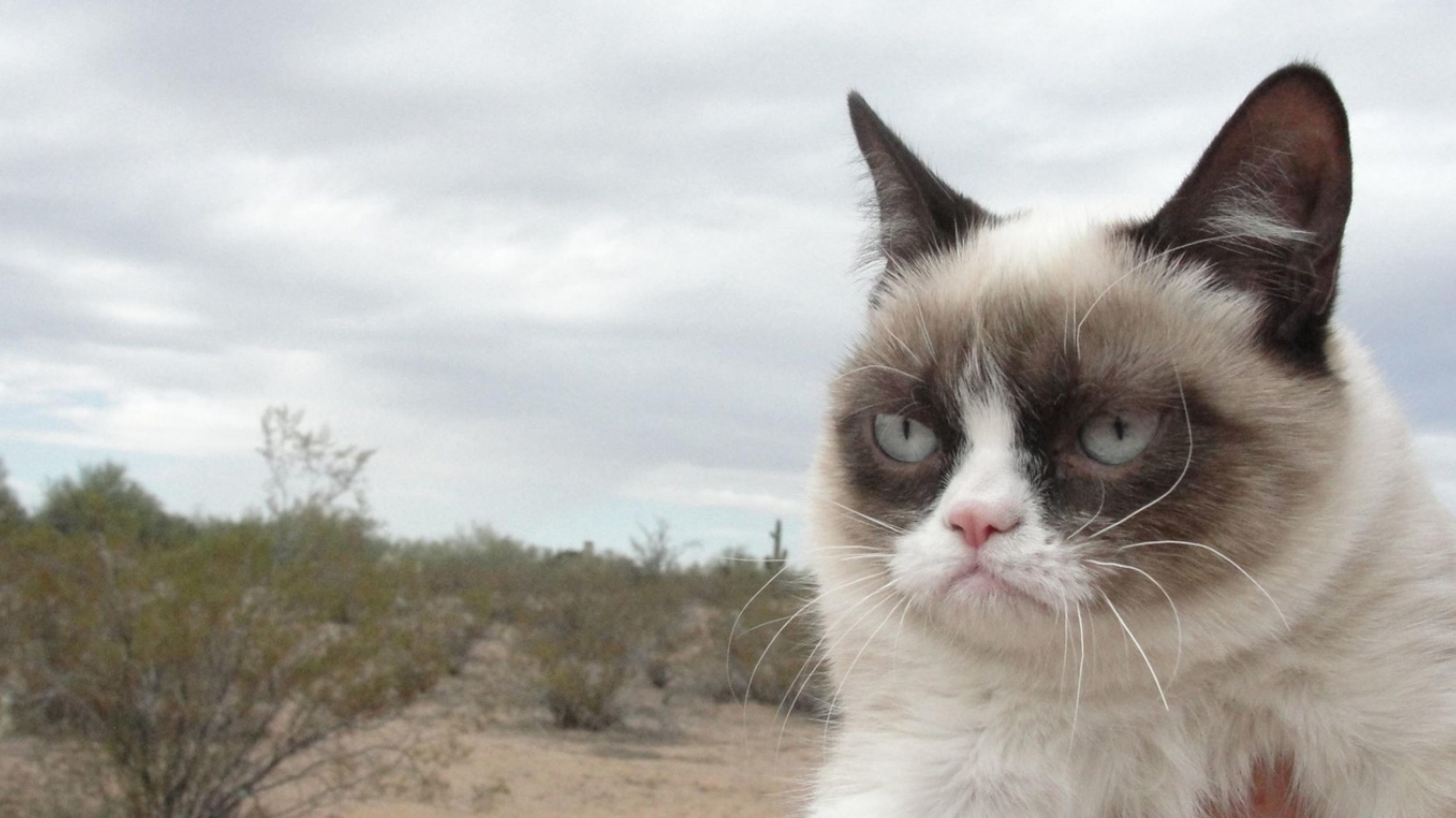 2500x1406 Grumpy Cat Wallpaper for PC – Full HD Pictures – download free