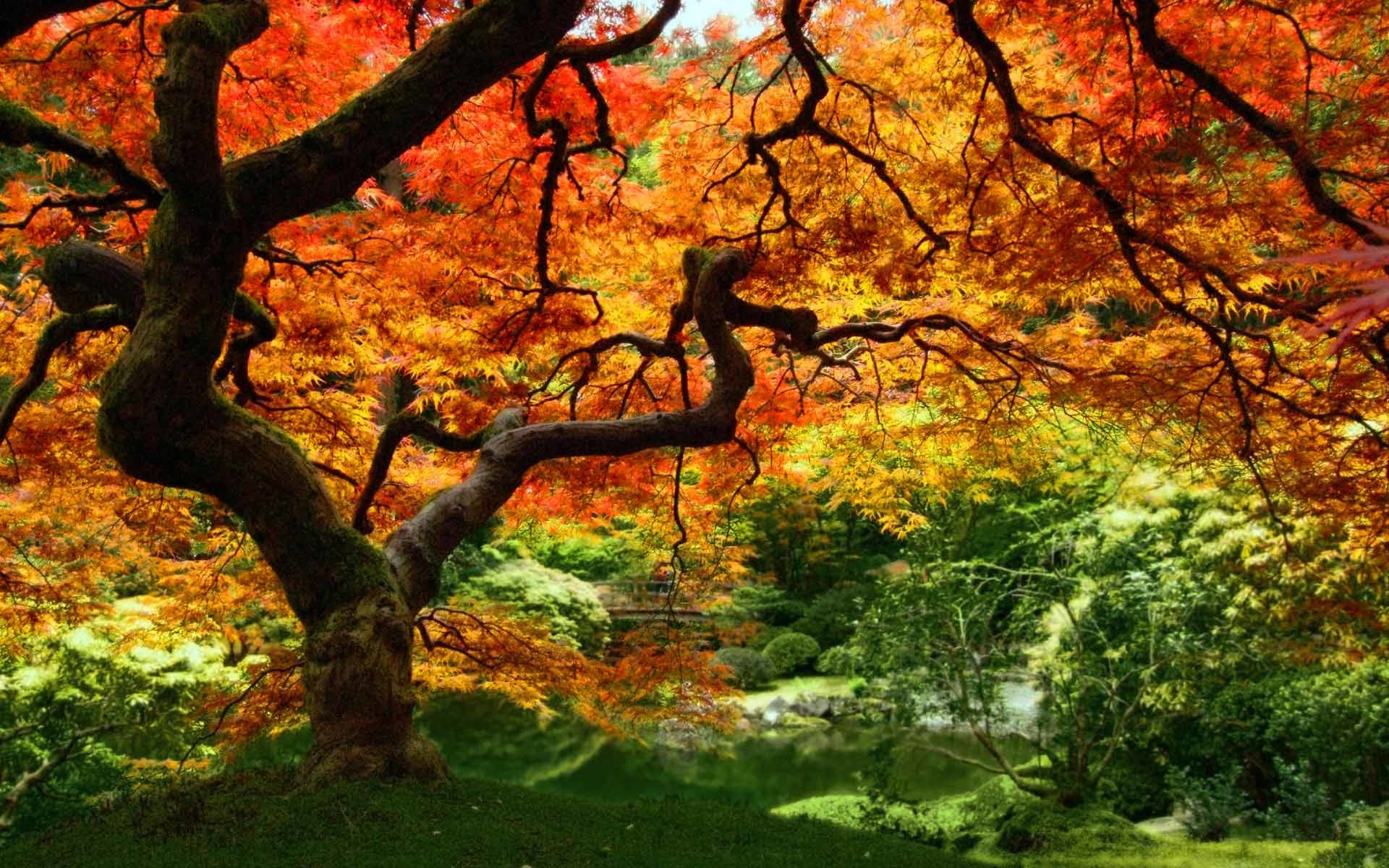 Res: 1920x1200, Free Autumn Wallpaper Backgrounds - Wallpaper Cave