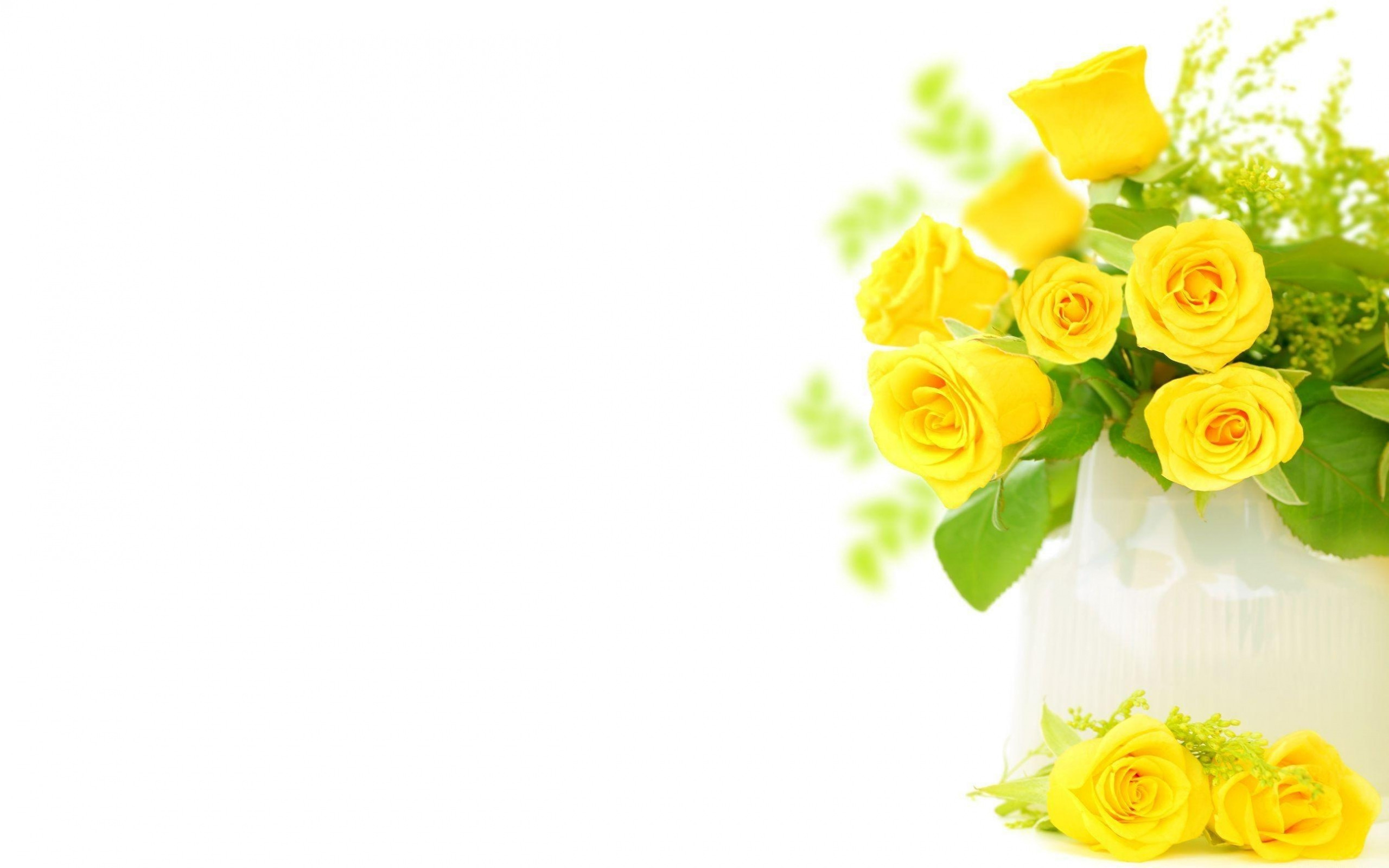 2560x1600  Wallpaper roses, flowers, flower, yellow, bright