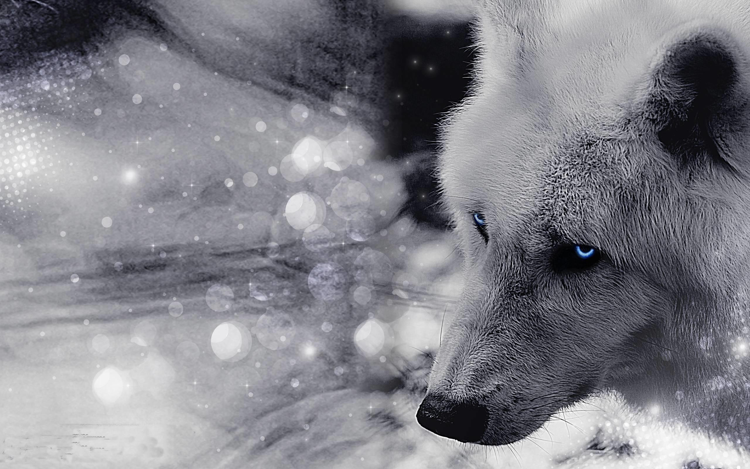 Wolf Desktop Backgrounds (69+ Images